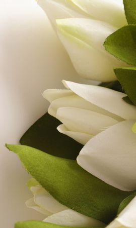 13632 télécharger le fond d'écran Plantes, Fleurs, Tulipes - économiseurs d'écran et images gratuitement
