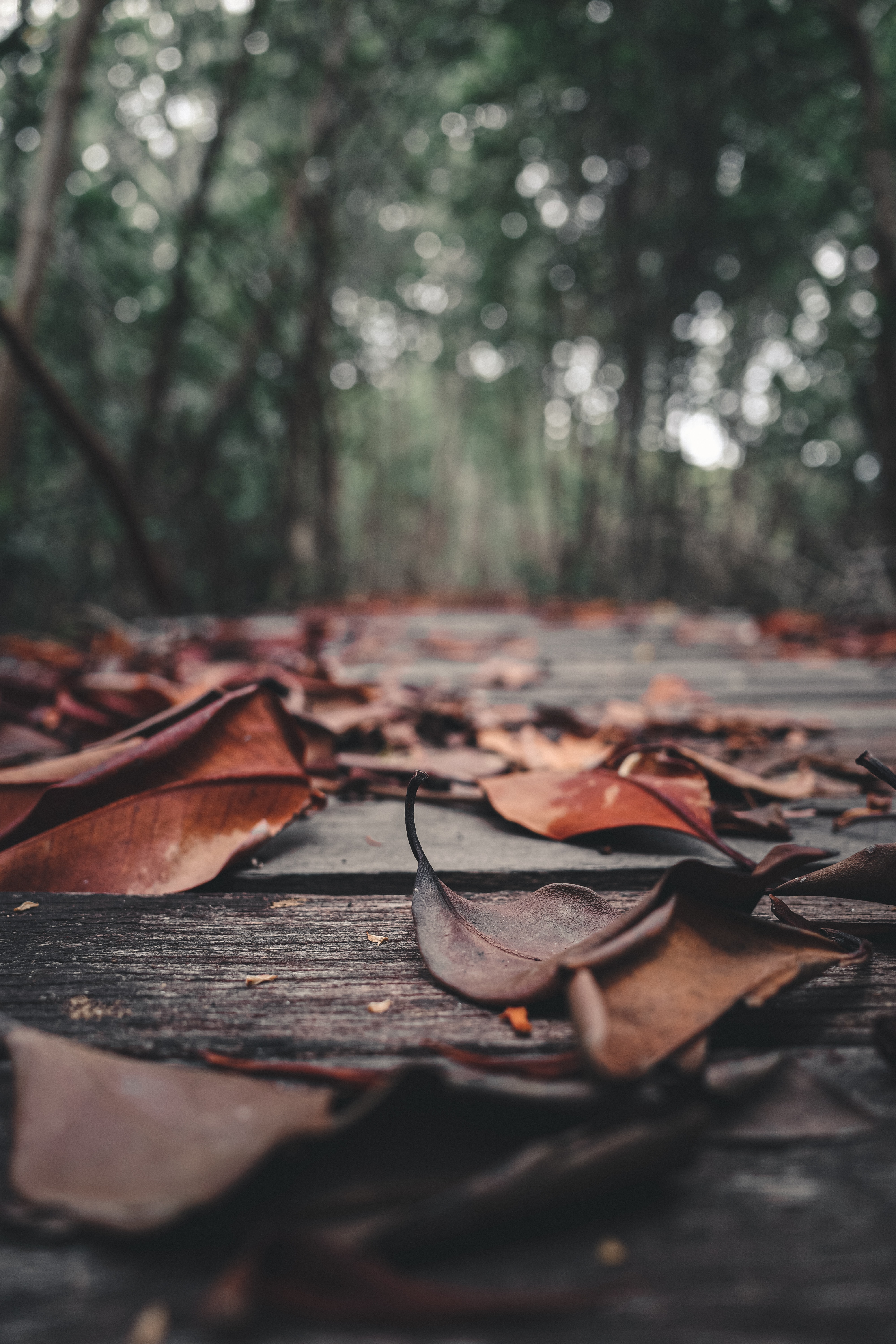 112961 download wallpaper Nature, Foliage, Leaves, Autumn, Planks, Board, Wood, Wooden screensavers and pictures for free