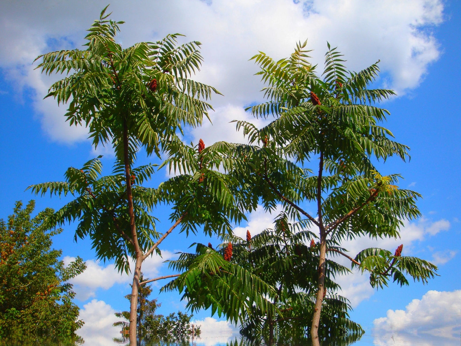 188 download wallpaper Plants, Trees, Sky screensavers and pictures for free