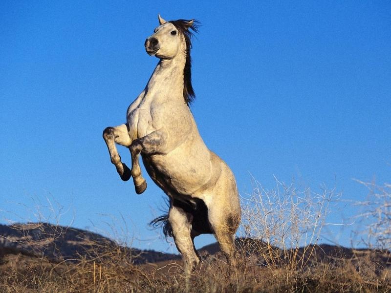 41419 Заставки и Обои Лошади на телефон. Скачать Лошади, Животные, Пейзаж картинки бесплатно