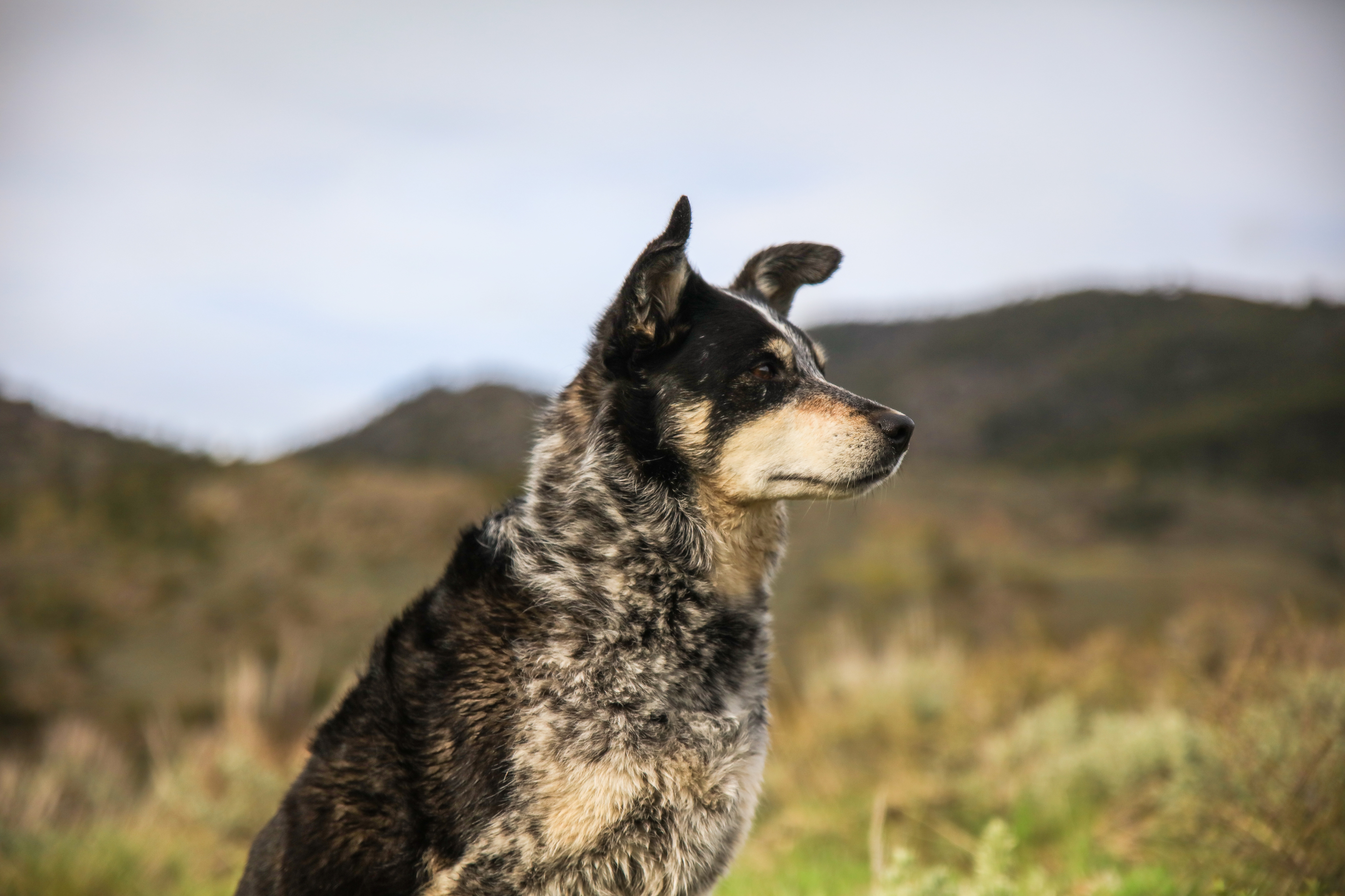 50971 download wallpaper Animals, Dog, Muzzle, Sight, Opinion screensavers and pictures for free