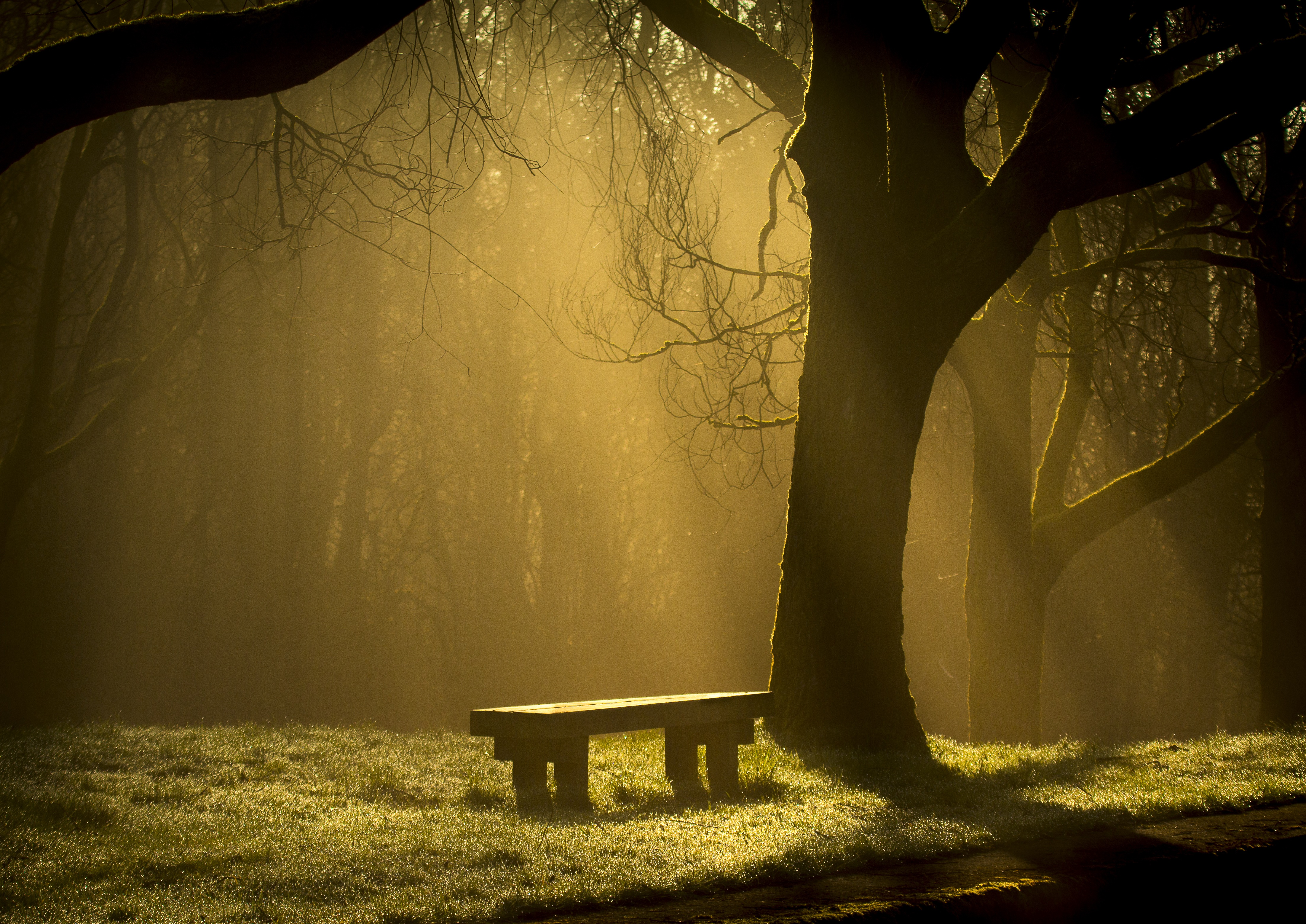 143130 Screensavers and Wallpapers Bench for phone. Download Nature, Forest, Fog, Bench pictures for free
