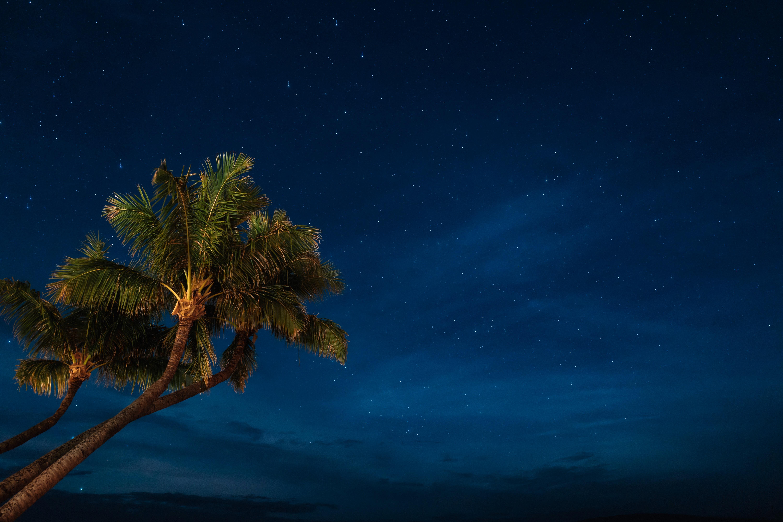 62561壁紙のダウンロード自然, ナイト, 星空, 熱帯, パームス-スクリーンセーバーと写真を無料で