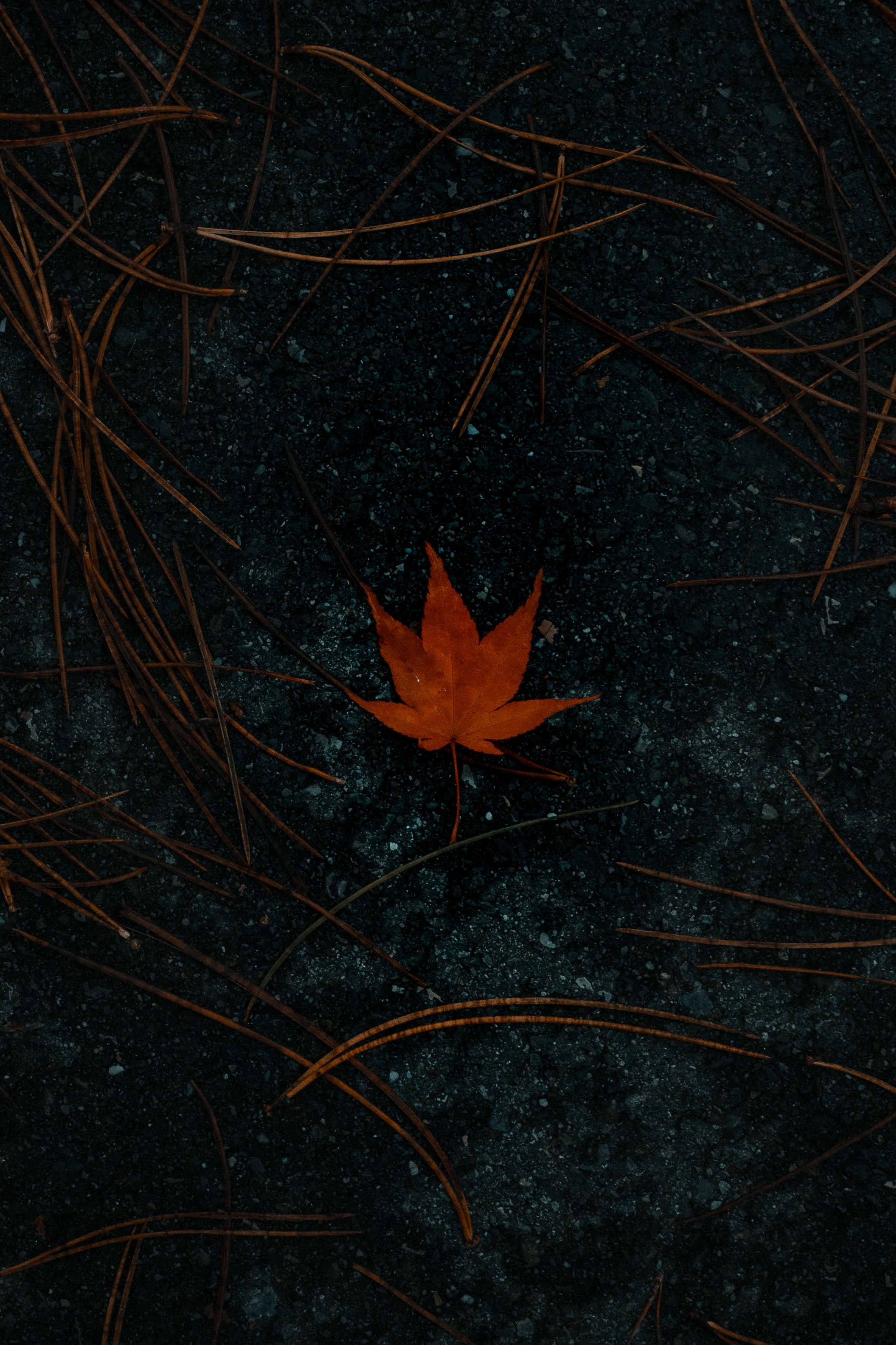 147996 download wallpaper Macro, Leaflet, Maple, Asphalt, Autumn screensavers and pictures for free