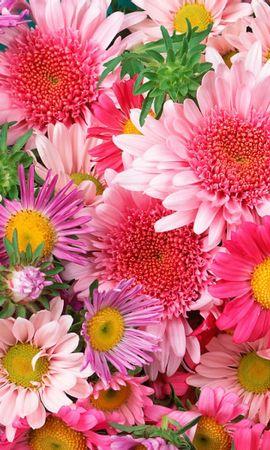 46774 baixar papel de parede Plantas, Flores - protetores de tela e imagens gratuitamente