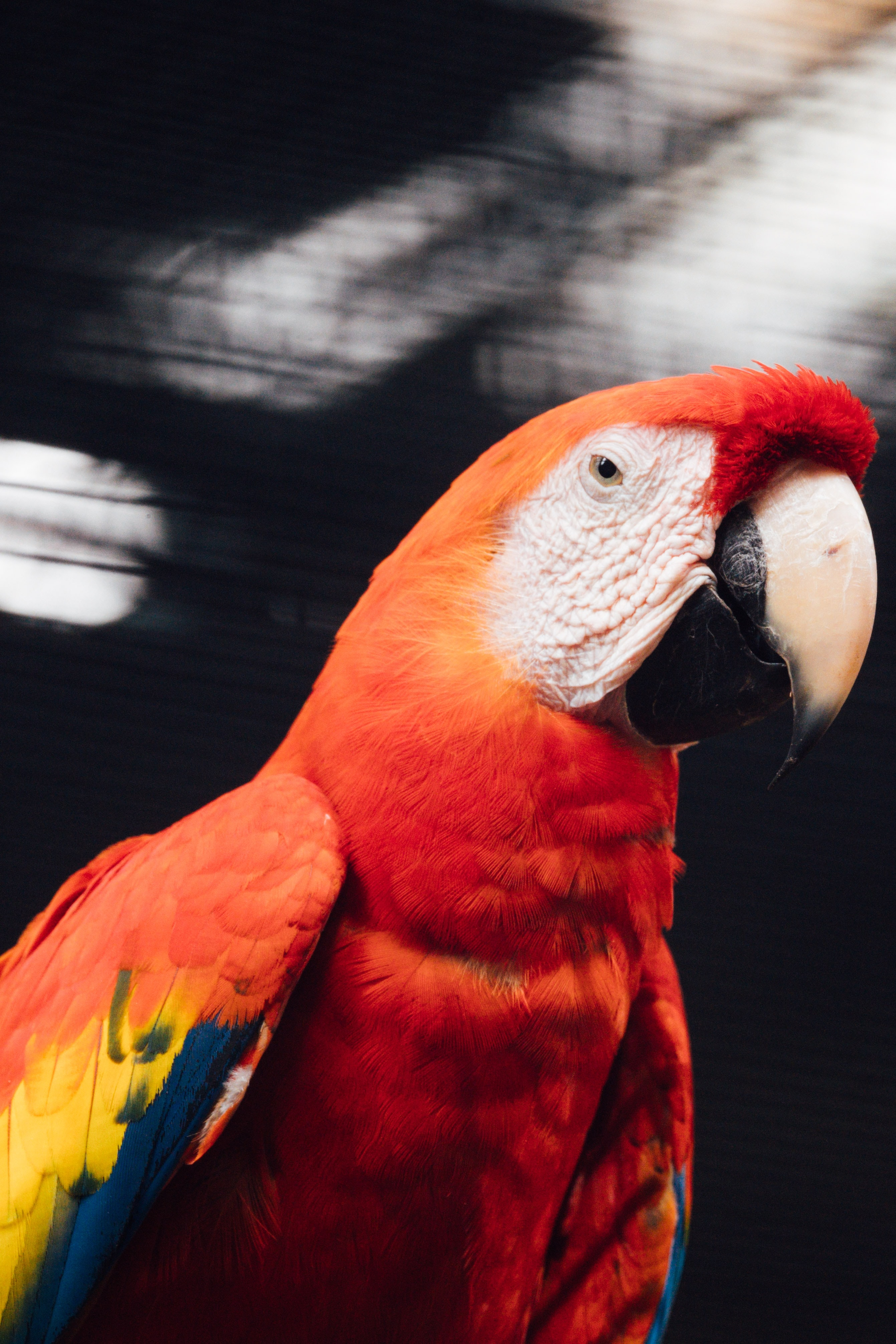 133267 download wallpaper Animals, Macaw, Parrots, Bird screensavers and pictures for free