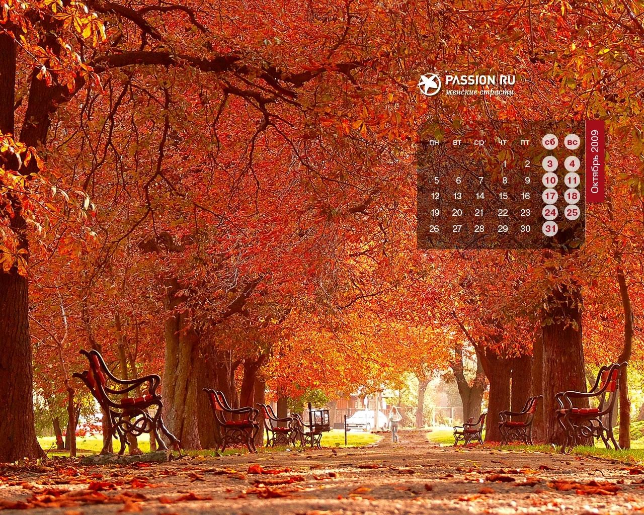 3495 скачать обои Пейзаж, Деревья, Осень - заставки и картинки бесплатно
