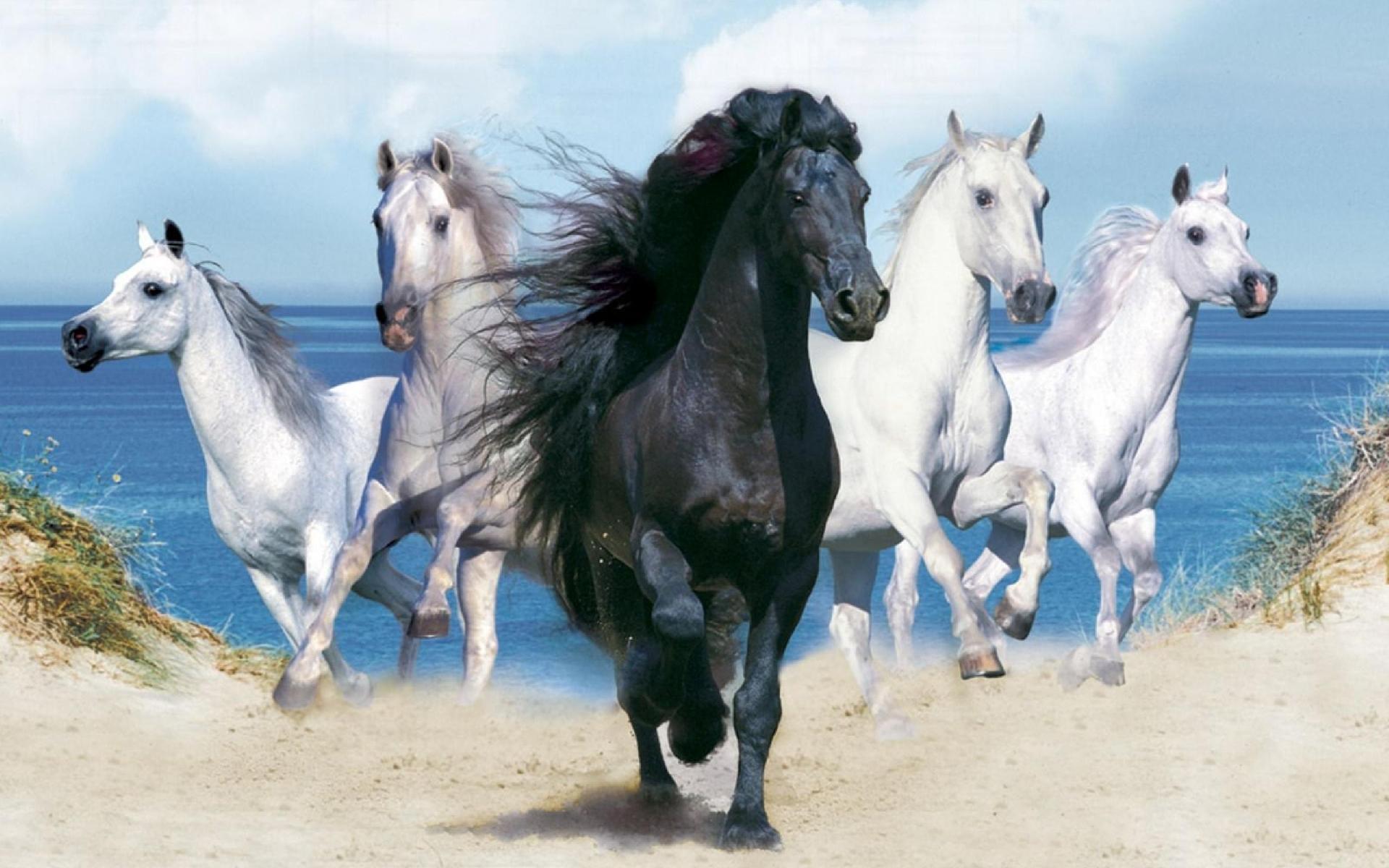 41987 скачать обои Животные, Лошади - заставки и картинки бесплатно