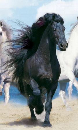 41987 download wallpaper Animals, Horses screensavers and pictures for free
