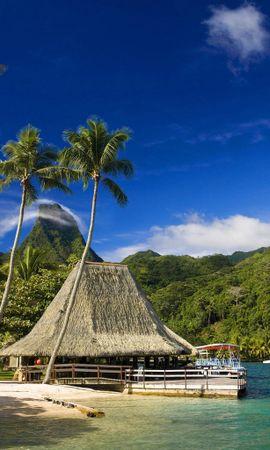 21229 descargar fondo de pantalla Paisaje, Mar, Playa, Palms: protectores de pantalla e imágenes gratis