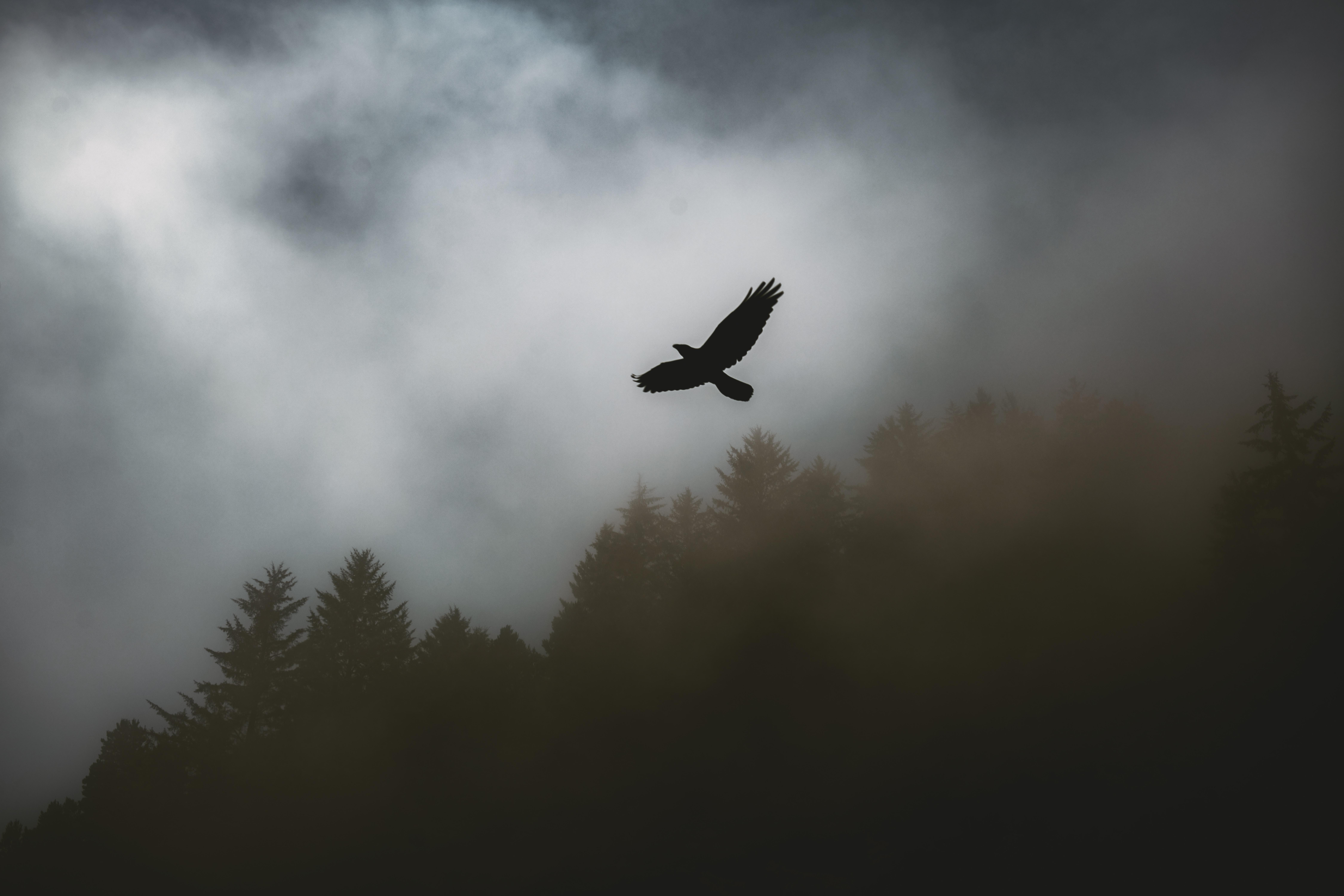 93471 скачать обои Темные, Птица, Ворон, Туман, Деревья, Темный - заставки и картинки бесплатно