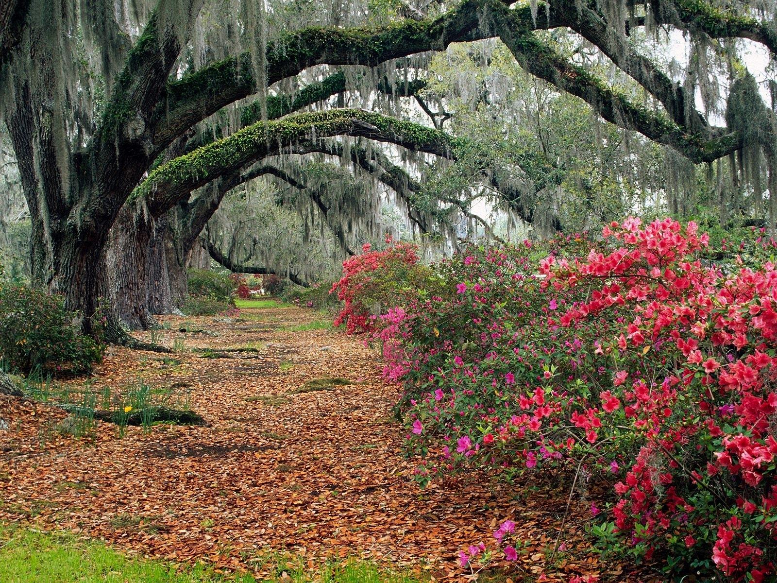 3470 скачать обои Пейзаж, Растения, Цветы, Деревья, Дороги - заставки и картинки бесплатно