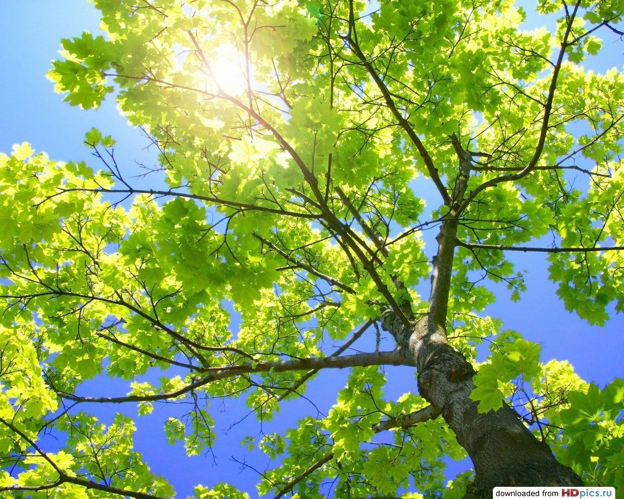 12564 скачать обои Пейзаж, Деревья, Солнце - заставки и картинки бесплатно
