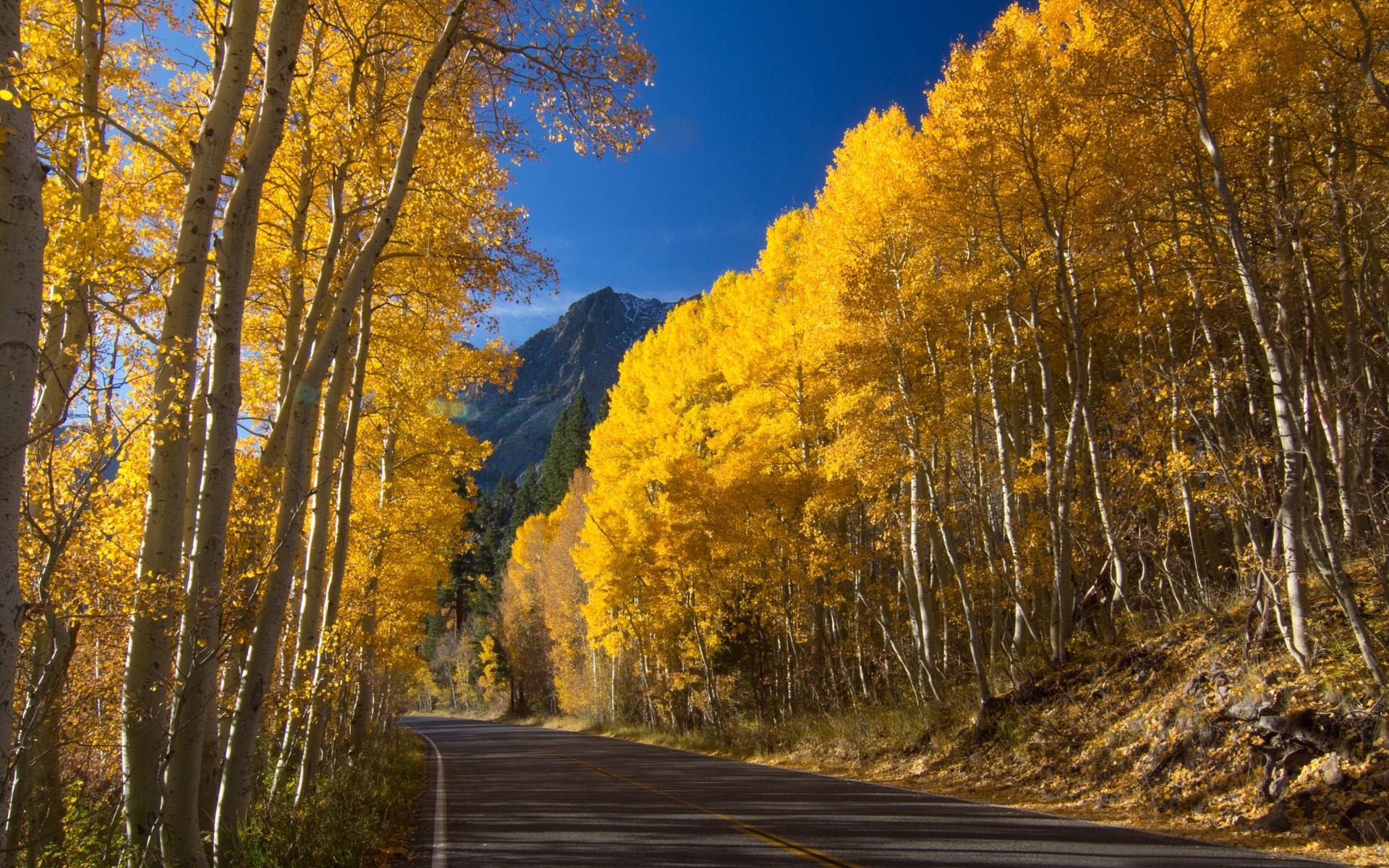 35997 скачать обои Пейзаж, Дороги, Осень - заставки и картинки бесплатно