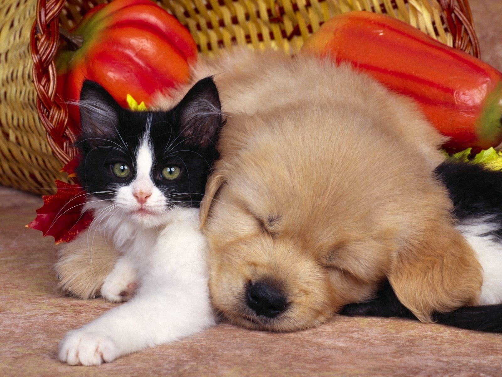 8396 descargar fondo de pantalla Animales, Gatos, Perros: protectores de pantalla e imágenes gratis