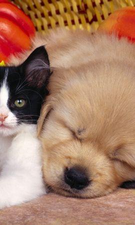 8396 скачать обои Животные, Кошки (Коты, Котики), Собаки - заставки и картинки бесплатно