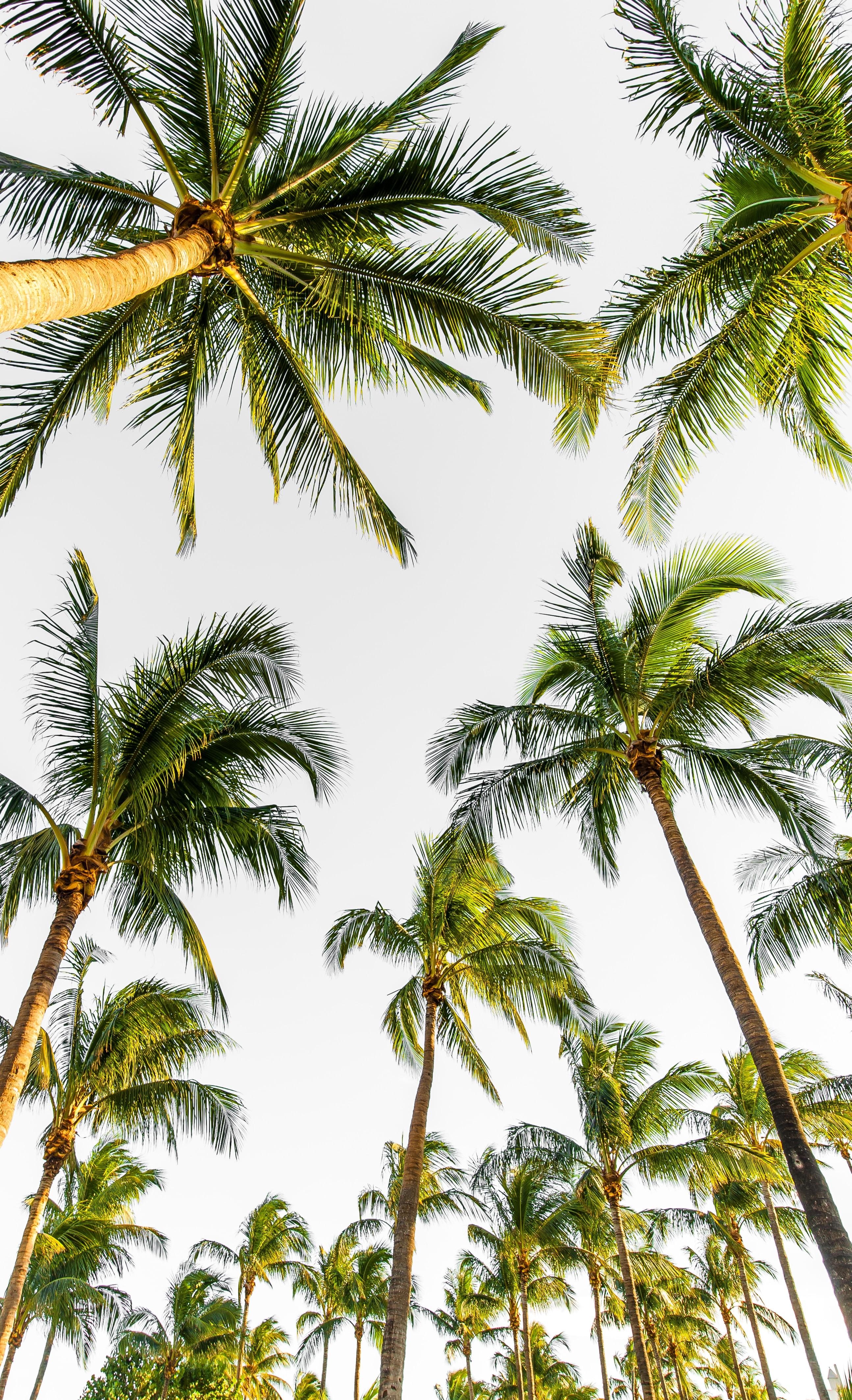 113350 скачать обои Природа, Деревья, Небо, Пальмы, Тропический, Верхушки - заставки и картинки бесплатно