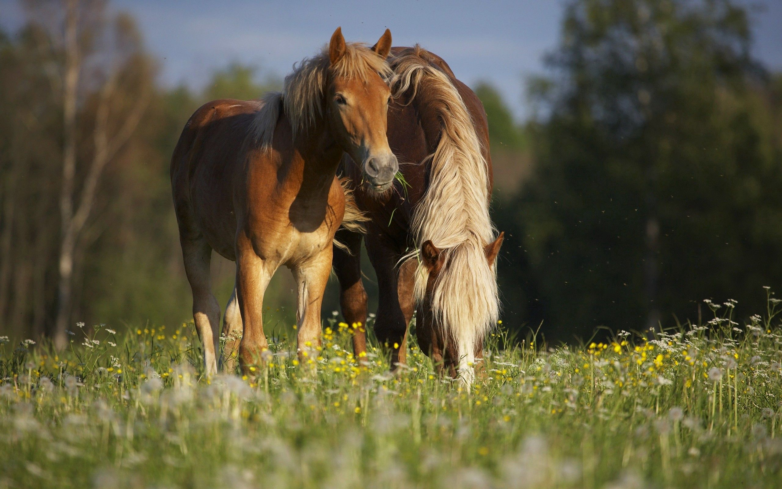 134221 download wallpaper Animals, Horse, Horses, Stallion, Grass, Stroll, Food screensavers and pictures for free