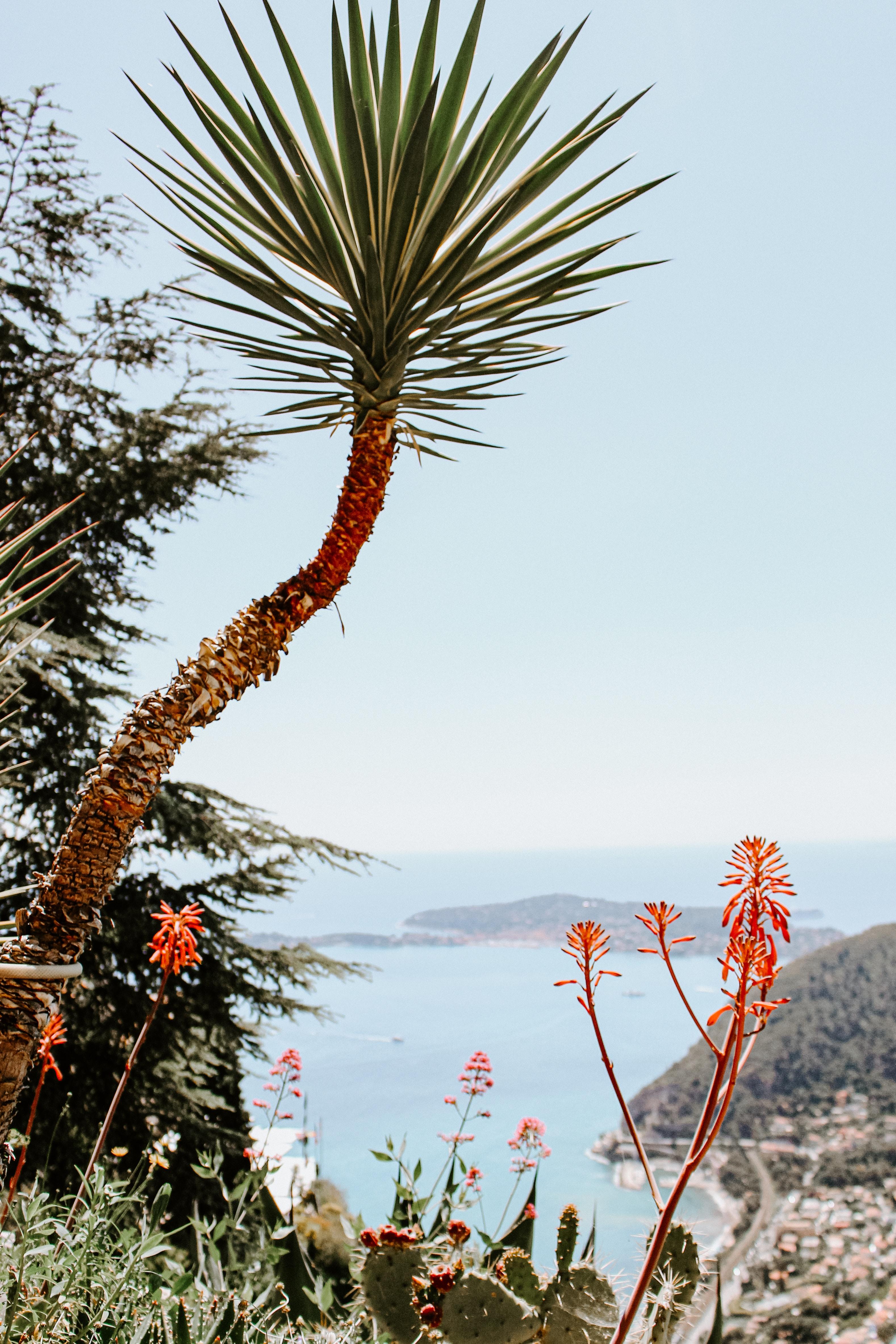 Téléchargez des papiers peints mobile Paysage, Plantes, Nature, Côte, Paume, Falaise gratuitement.