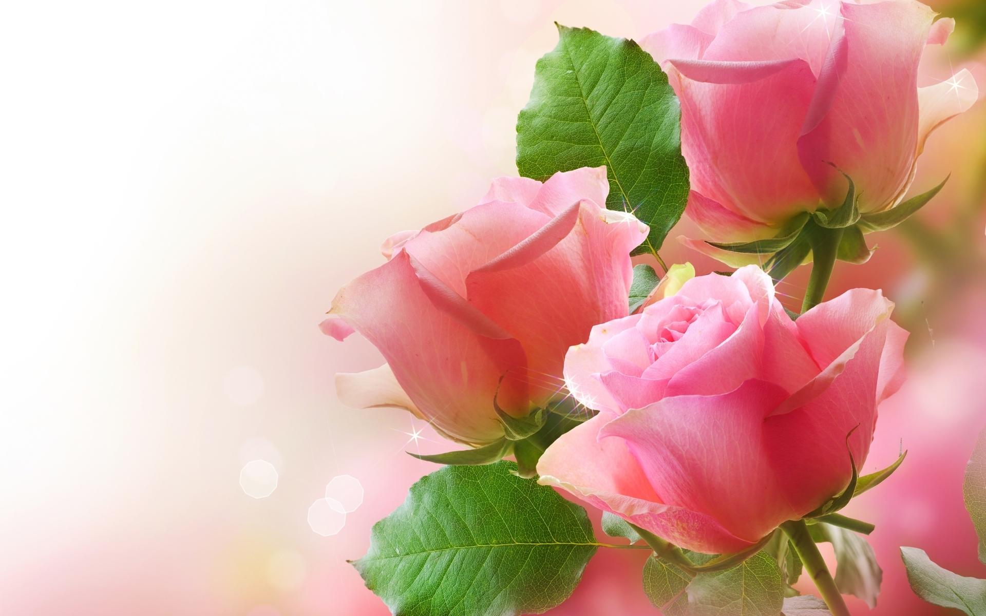 41077 скачать обои Растения, Цветы - заставки и картинки бесплатно