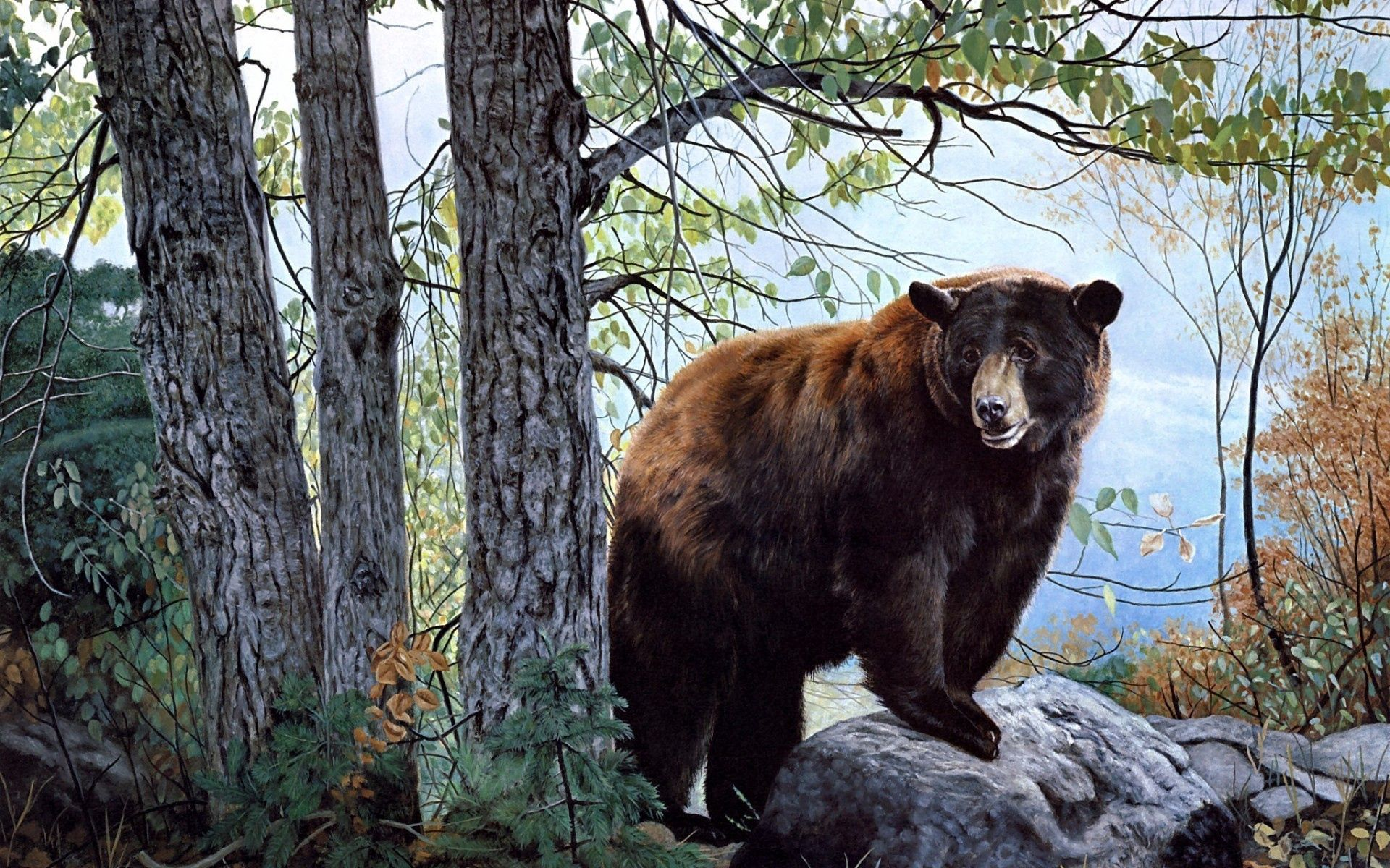 79583 Screensavers and Wallpapers Bear for phone. Download Animals, Trees, Forest, Bear pictures for free