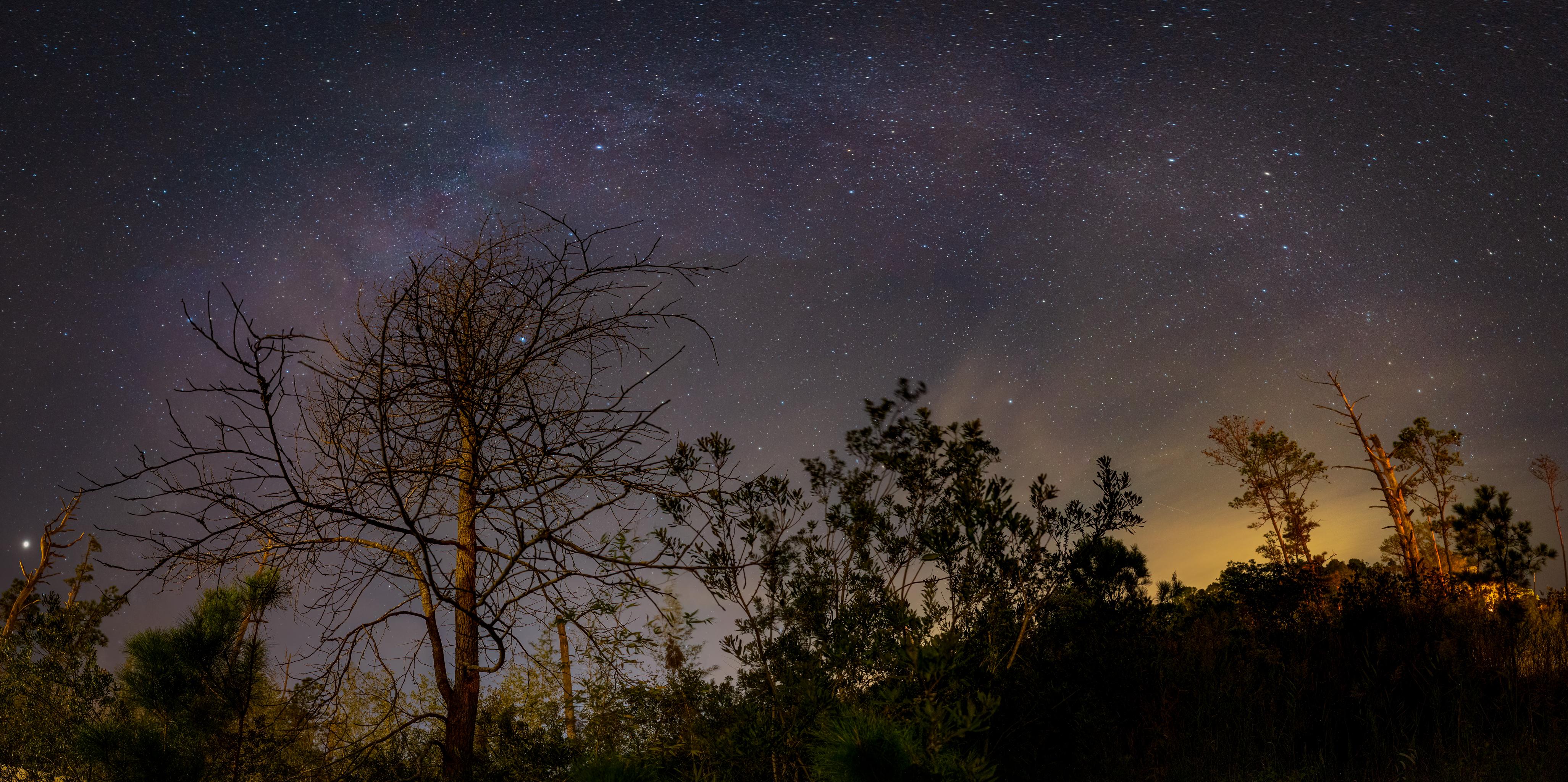 148848 скачать обои Темные, Дерево, Ветки, Ночь, Звездное Небо, Звезды - заставки и картинки бесплатно