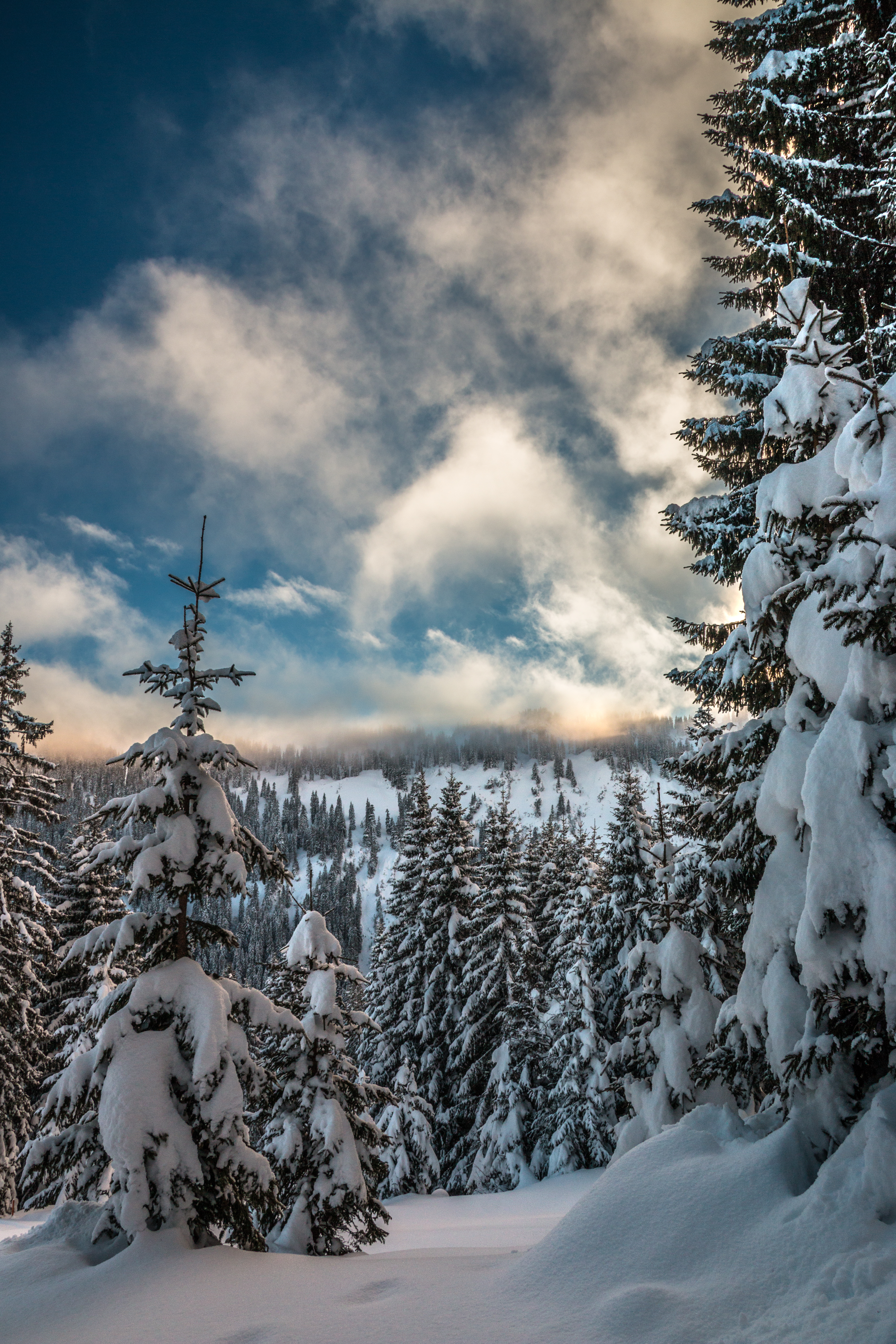 54482 download wallpaper Nature, Snow, Winter, Ate, Branches, Sky, Mountains screensavers and pictures for free