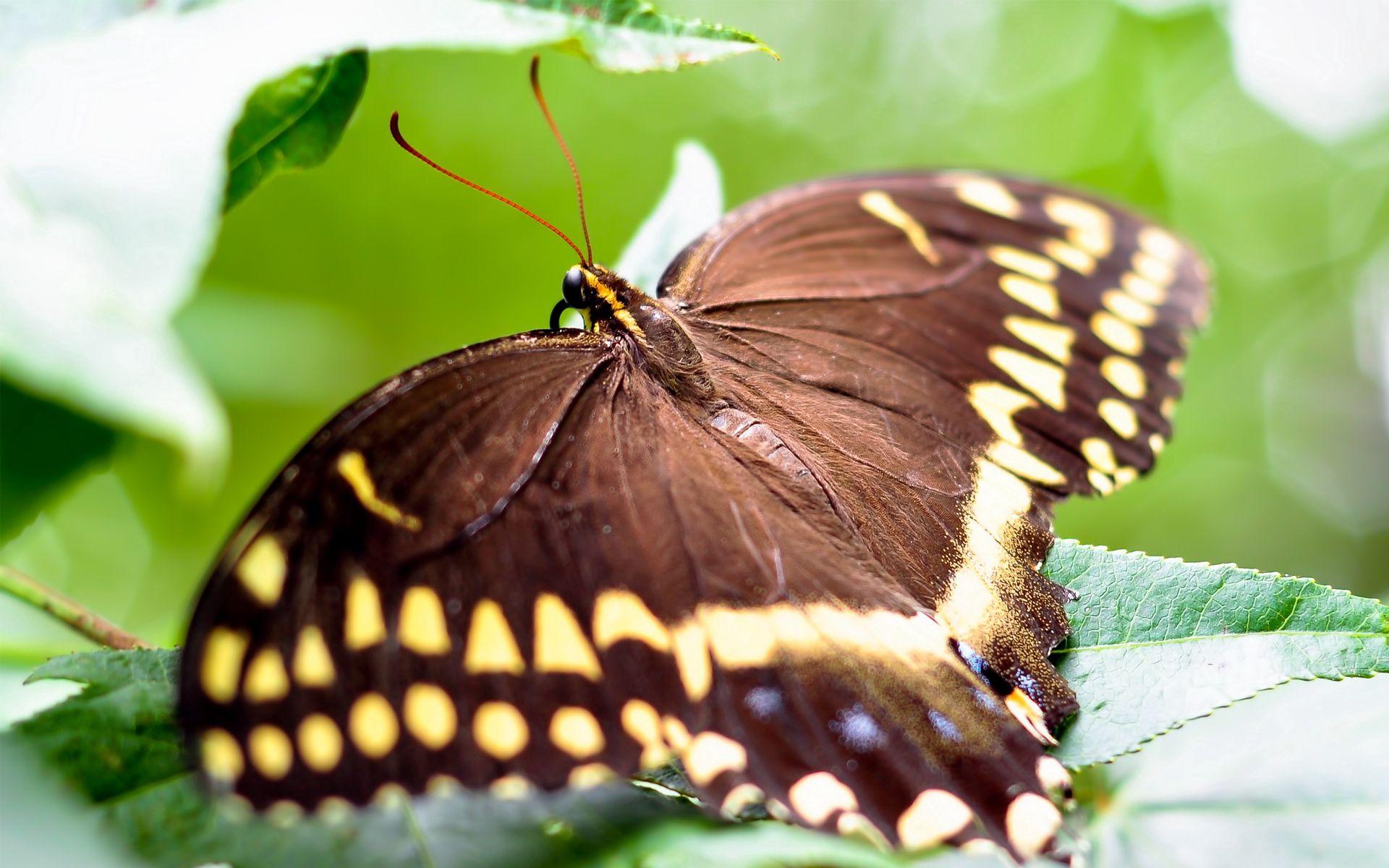 81302 скачать обои Макро, Бабочка, Окрас, Листья, Крылья - заставки и картинки бесплатно
