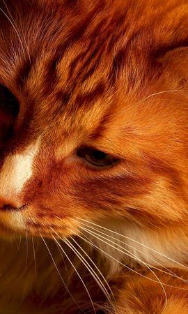 25094 скачать обои Животные, Кошки (Коты, Котики) - заставки и картинки бесплатно