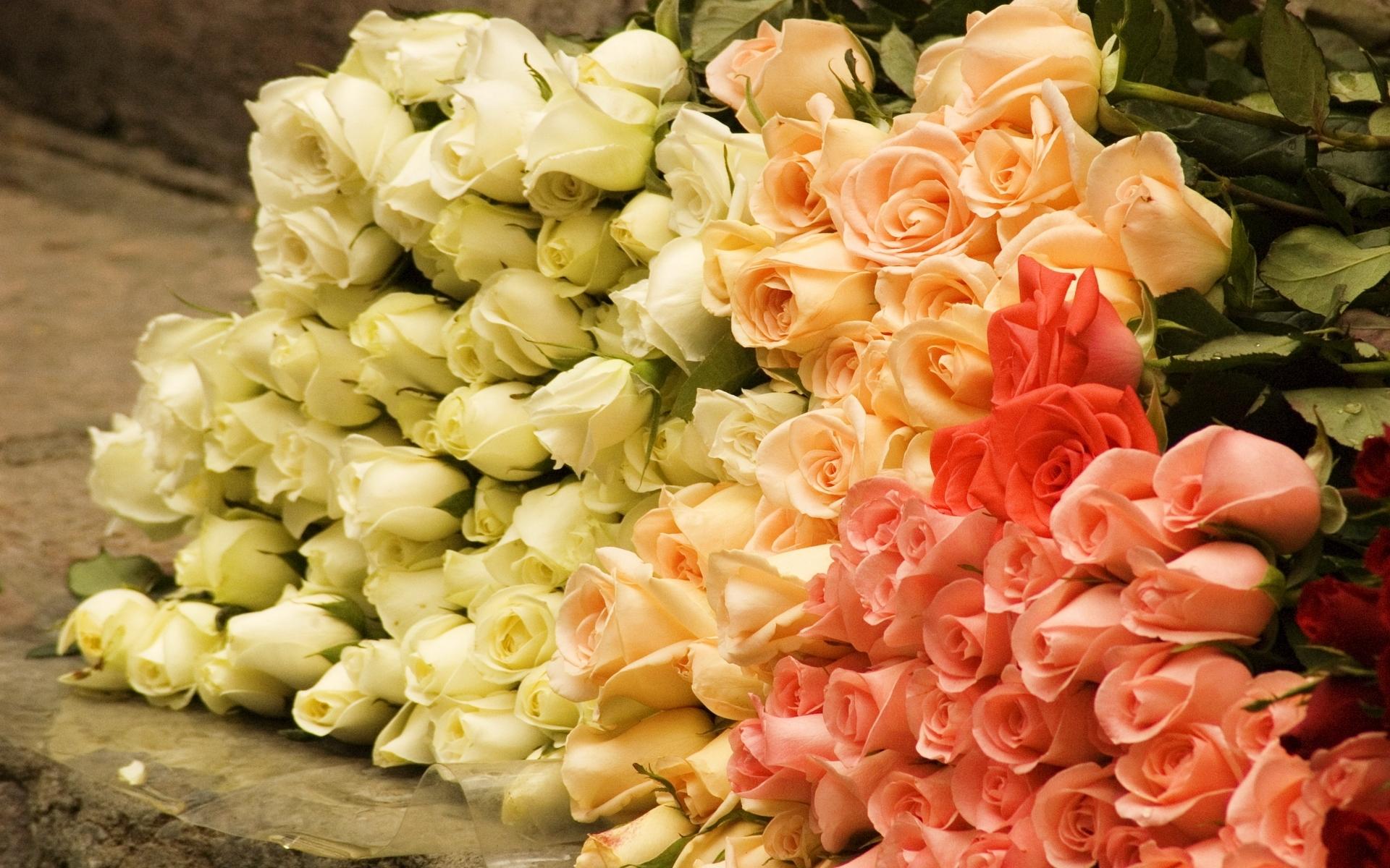 46141 скачать обои Растения, Цветы, Розы - заставки и картинки бесплатно