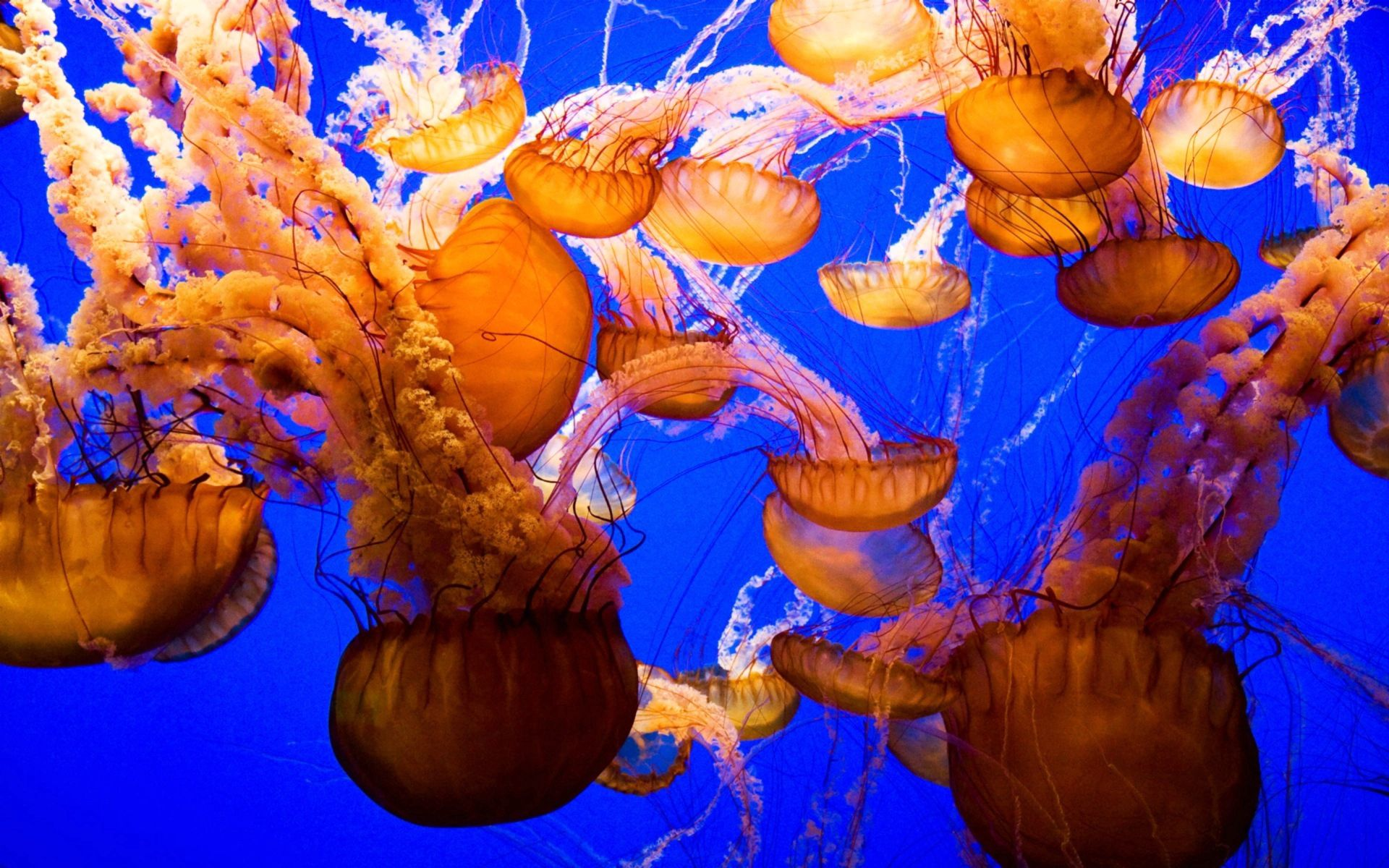 145648 download wallpaper Animals, Underwater World, Sea, Ocean, Jellyfish screensavers and pictures for free