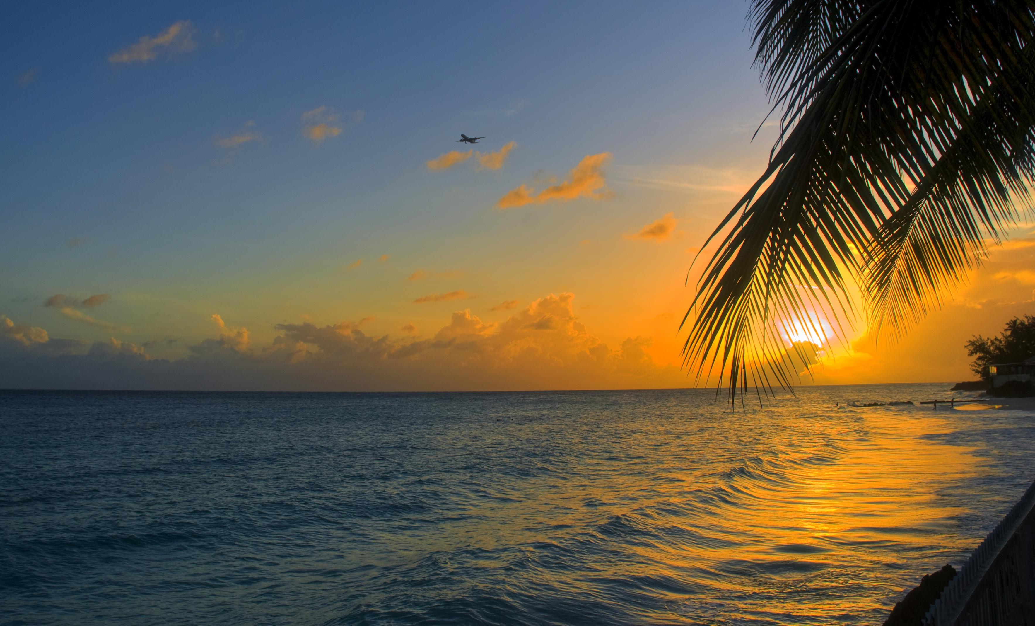 87471 免費下載壁紙 性质, 海洋, 日落, 棕榈, 帕尔马, 支撑, 海岸, 巴巴多斯 屏保和圖片