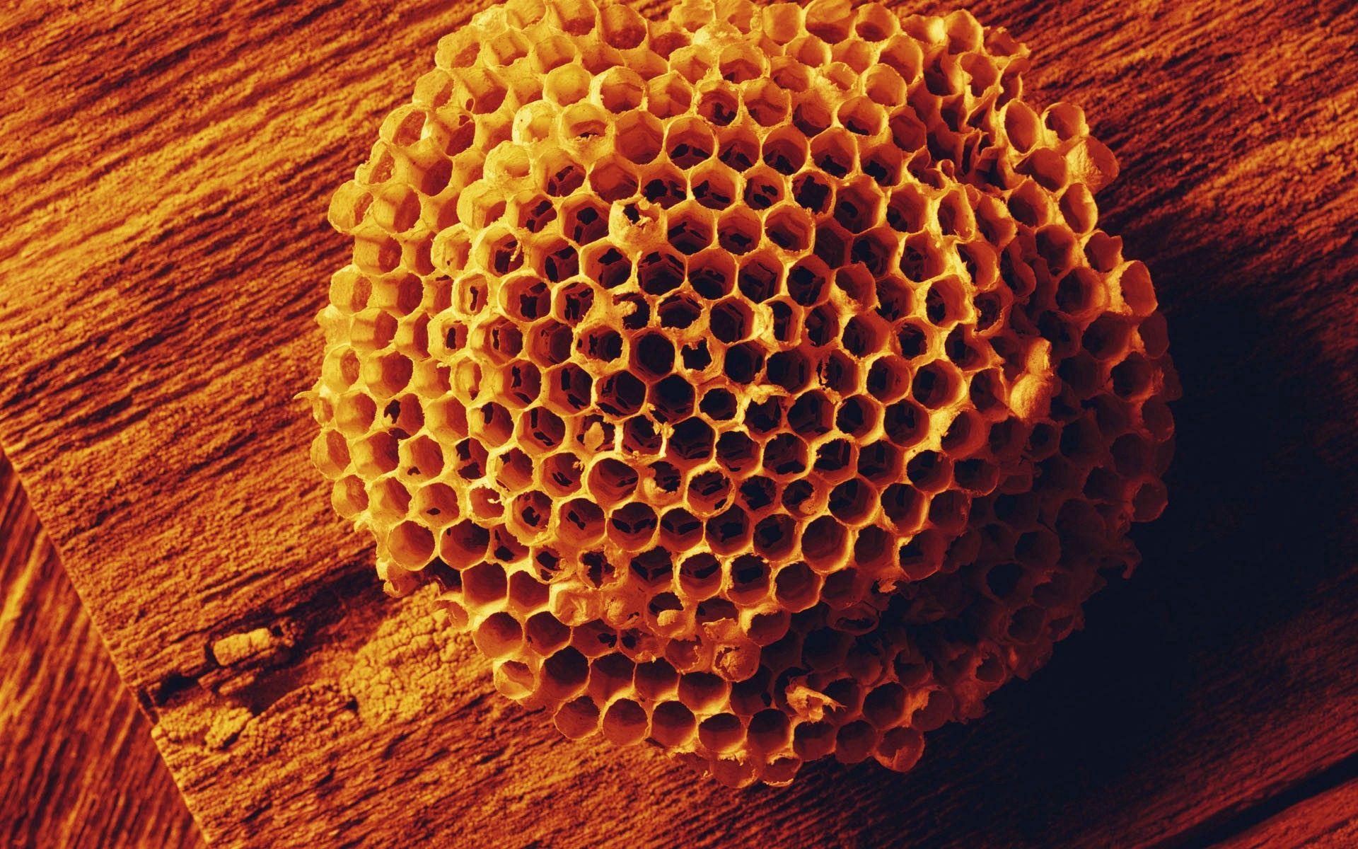 96421 Hintergrundbild herunterladen Bienen, Verschiedenes, Sonstige, Oberfläche, Die Form, Form, Honig, Bienenwabe, Waben - Bildschirmschoner und Bilder kostenlos