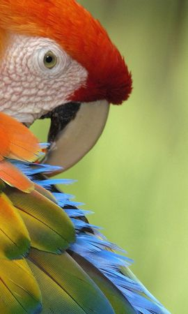 154303 download wallpaper Animals, Parrots, Color, Multicolored, Motley, Bird, Feather screensavers and pictures for free