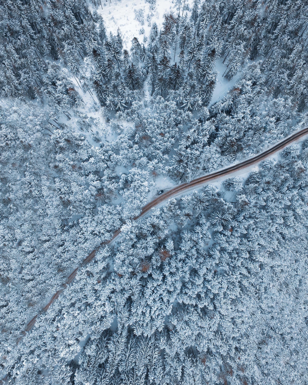 155620 免費下載壁紙 性质, 森林, 冬天, 从上面看, 顶视图, 雪, 雪覆盖, 白雪覆盖, 树 屏保和圖片