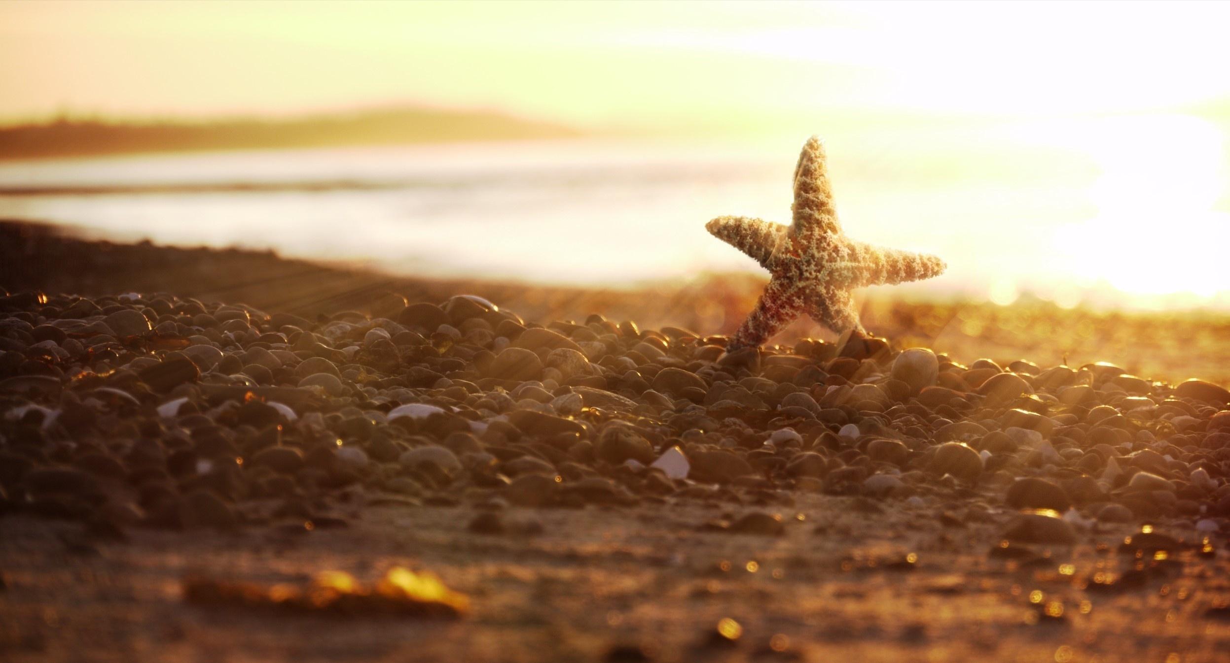 17718 скачать обои Пейзаж, Море, Пляж - заставки и картинки бесплатно