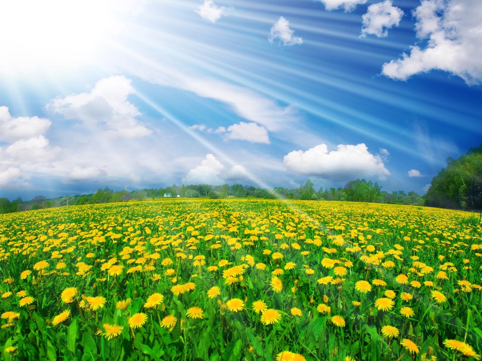 1031 скачать обои Пейзаж, Цветы, Поля, Небо - заставки и картинки бесплатно