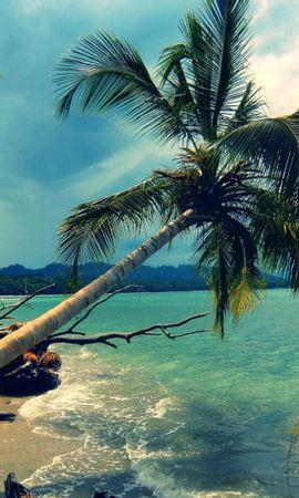 28095 скачать обои Пейзаж, Море, Облака, Пляж, Пальмы - заставки и картинки бесплатно