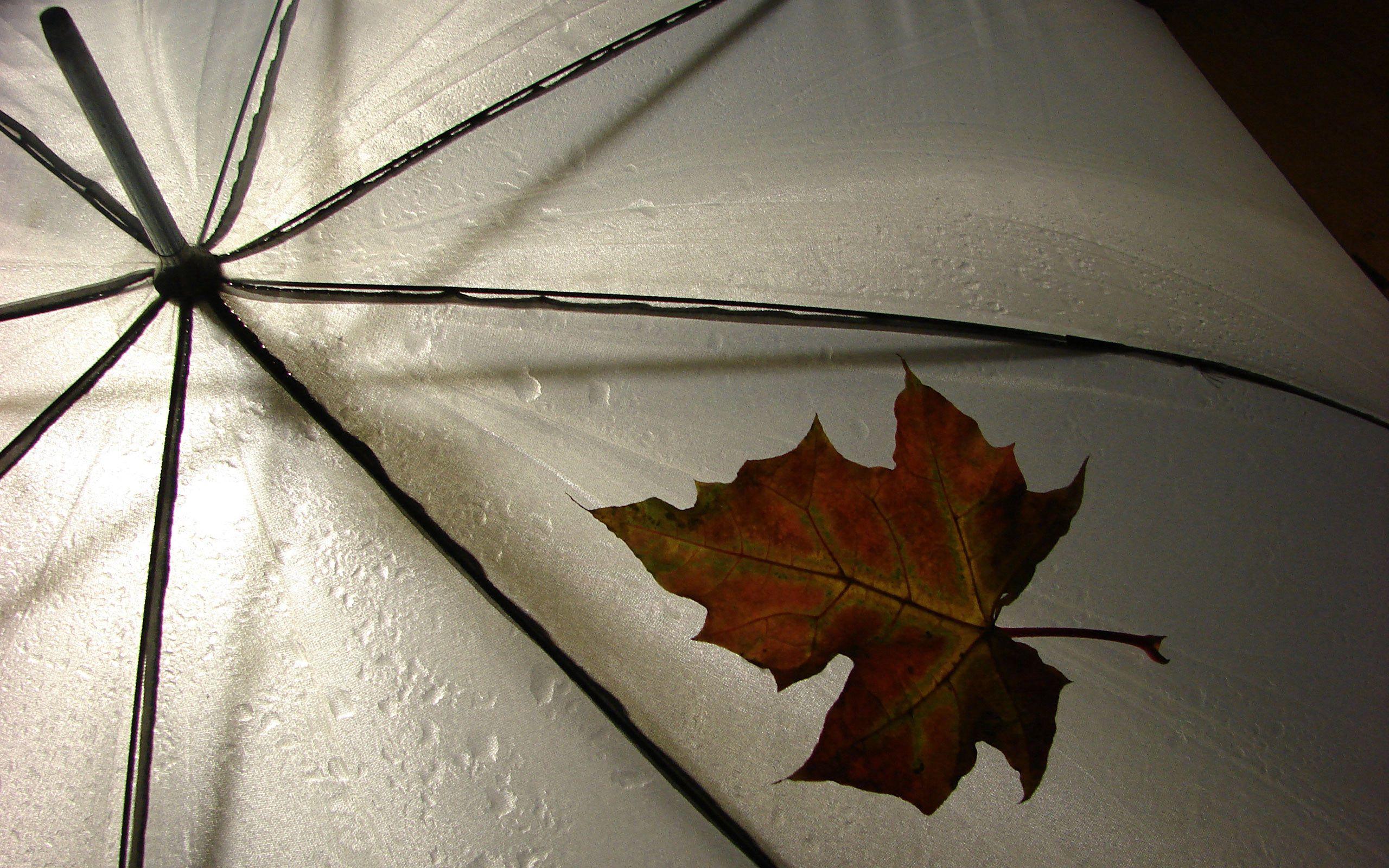 115258 скачать обои Зонт, Природа, Осень, Капли, Лист, Желтый, Клен - заставки и картинки бесплатно