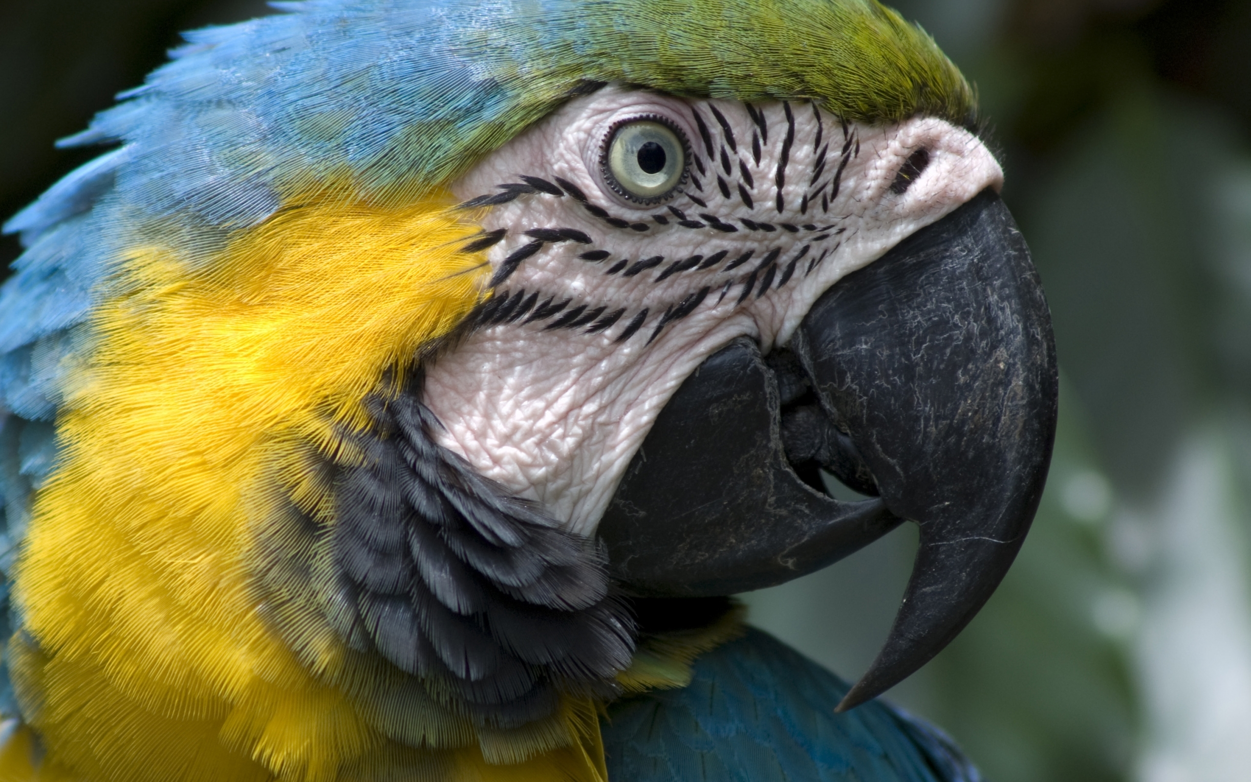 3150 download wallpaper Animals, Birds, Parrots screensavers and pictures for free