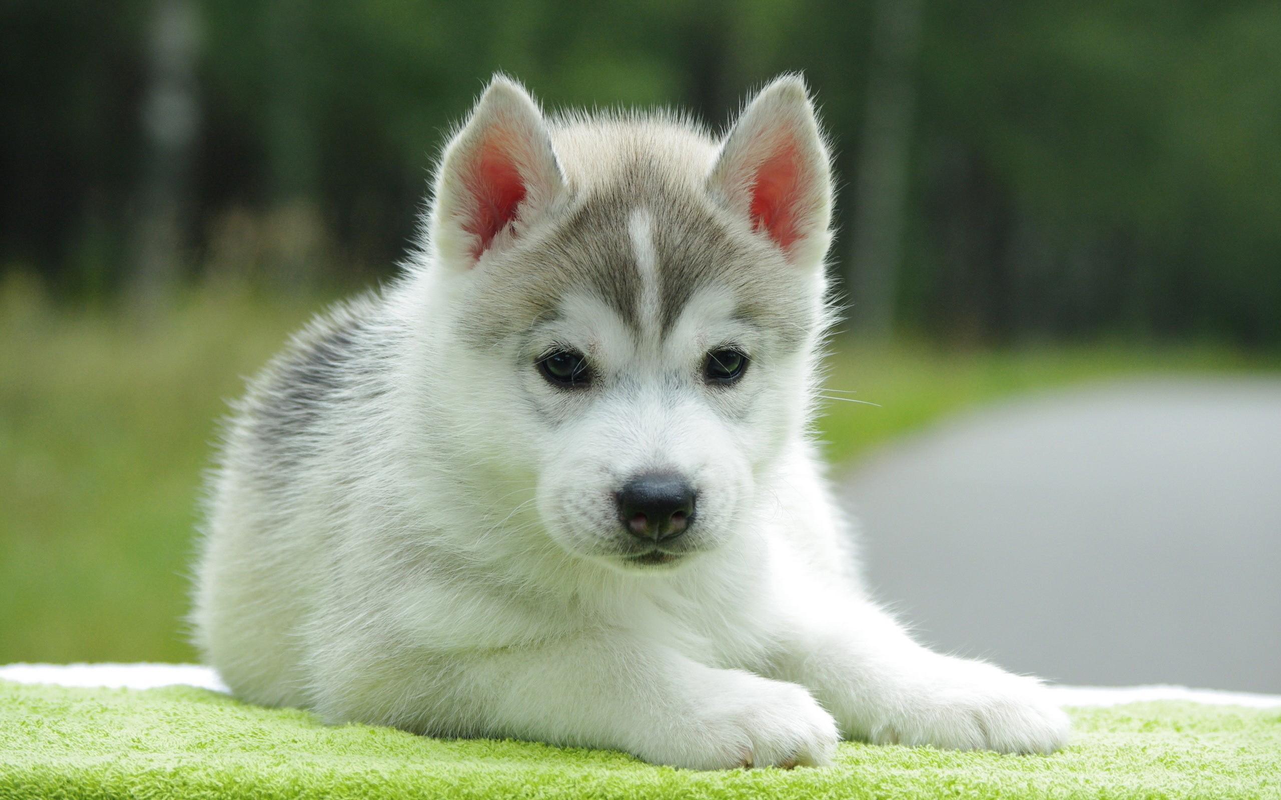 44139 скачать обои Собаки, Животные - заставки и картинки бесплатно