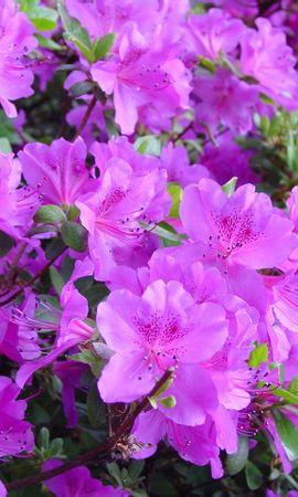 7625 скачать обои Растения, Цветы - заставки и картинки бесплатно