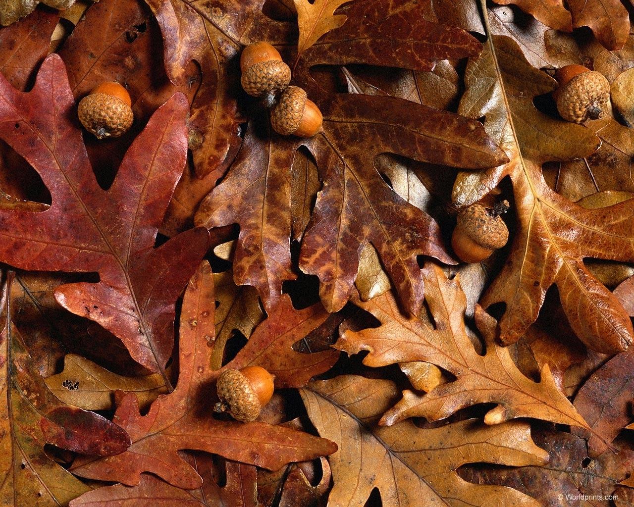 6949 скачать обои Фон, Осень, Листья - заставки и картинки бесплатно