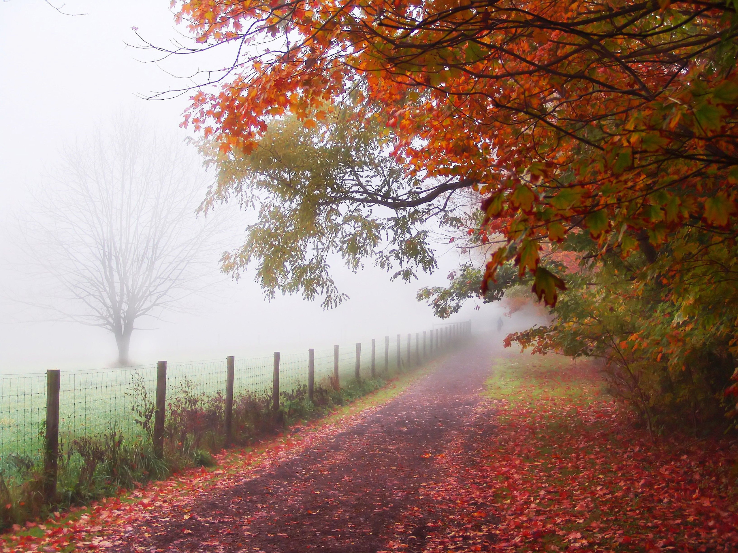 30481 download wallpaper Landscape, Trees, Roads, Autumn screensavers and pictures for free