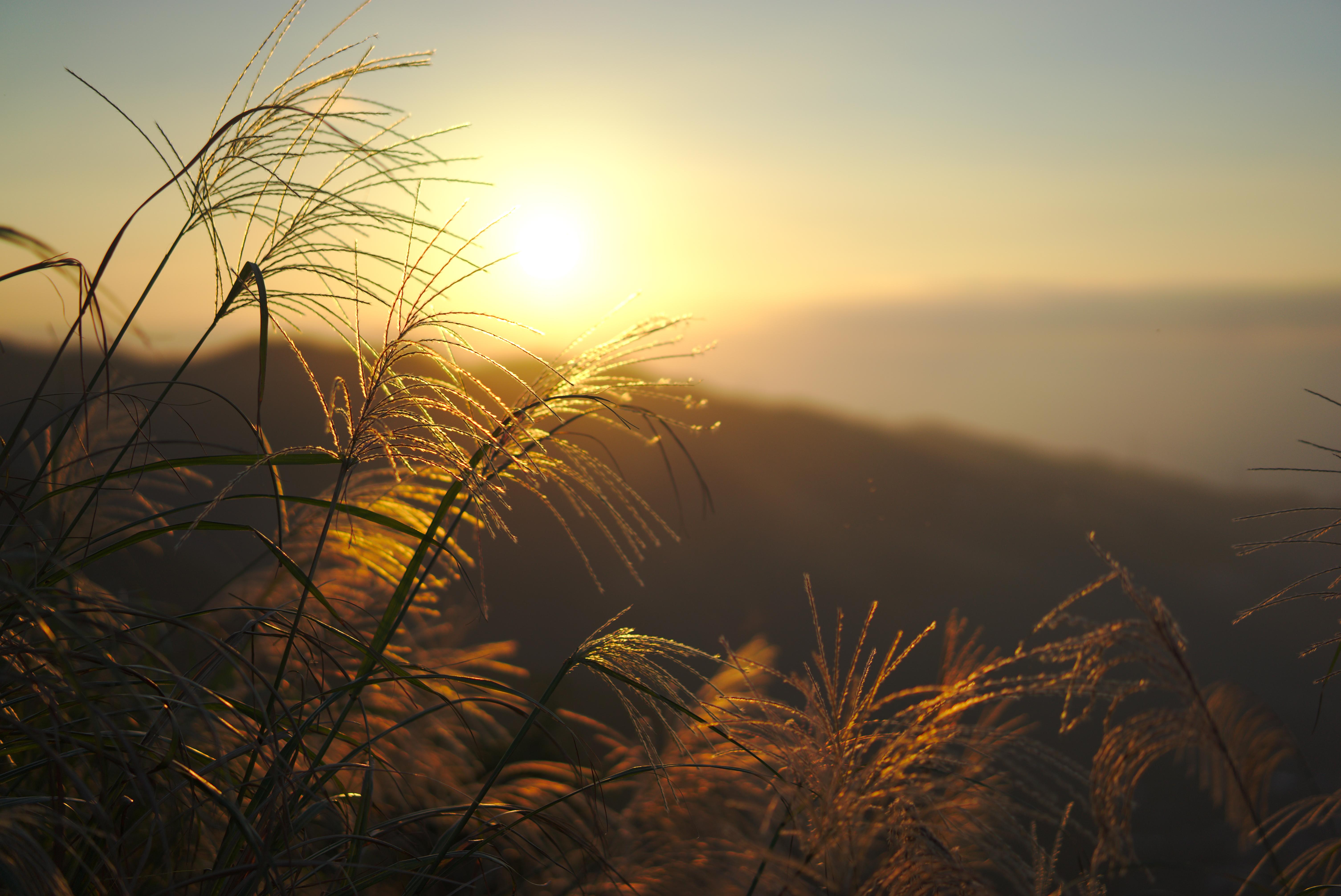 116497 скачать обои Природа, Трава, Закат, Свет, Растения, Солнце - заставки и картинки бесплатно