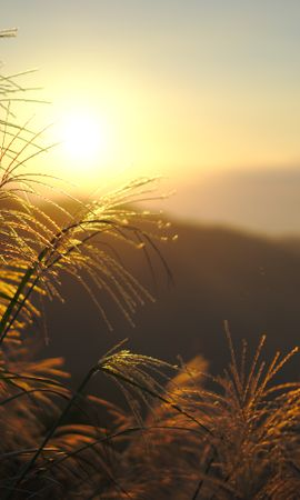 116497 download wallpaper Nature, Grass, Sunset, Shine, Light, Plants, Sun screensavers and pictures for free