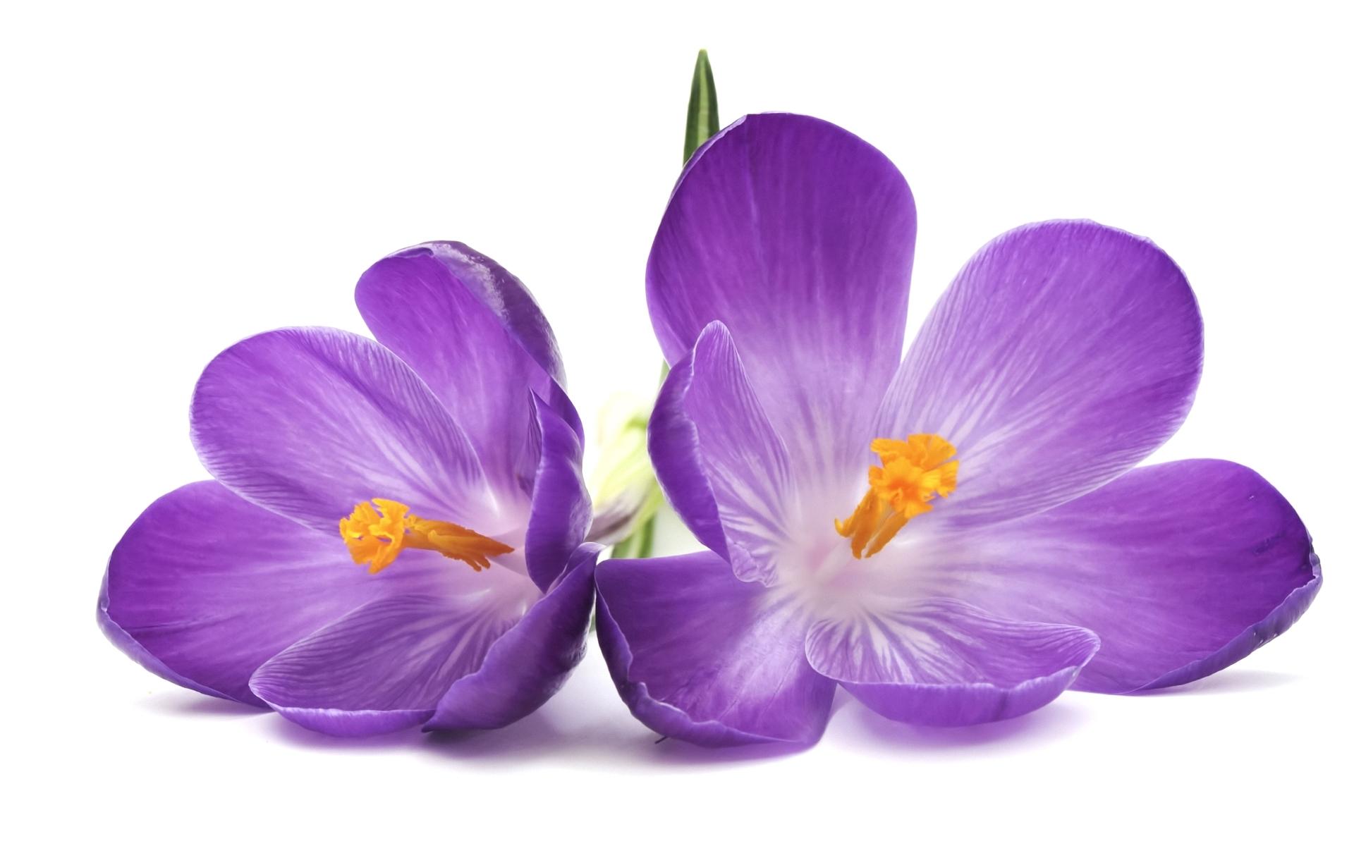 2930 скачать обои Растения, Цветы - заставки и картинки бесплатно