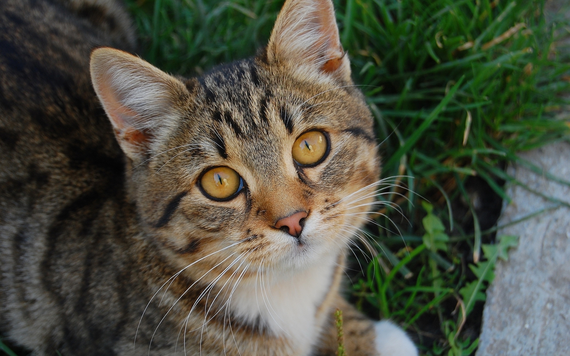 49507 download wallpaper Animals, Cats screensavers and pictures for free
