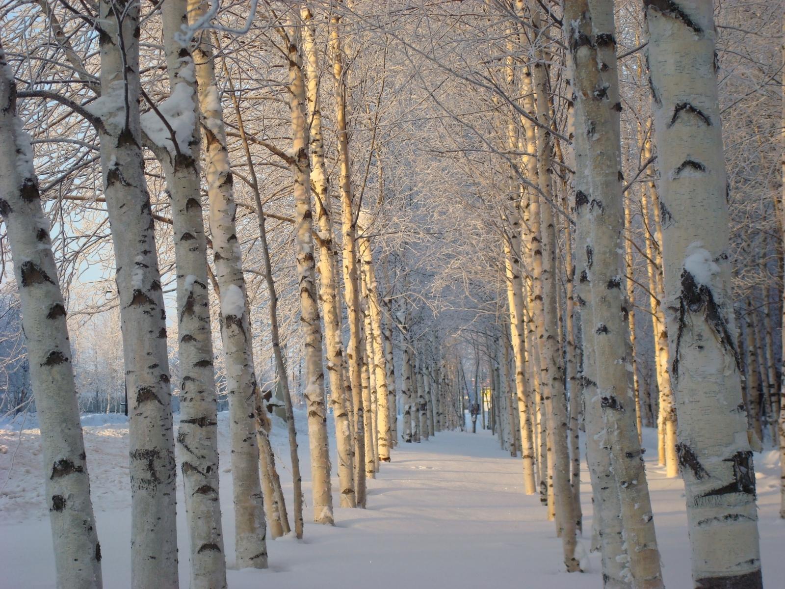 2640 скачать обои Пейзаж, Зима, Деревья, Снег - заставки и картинки бесплатно