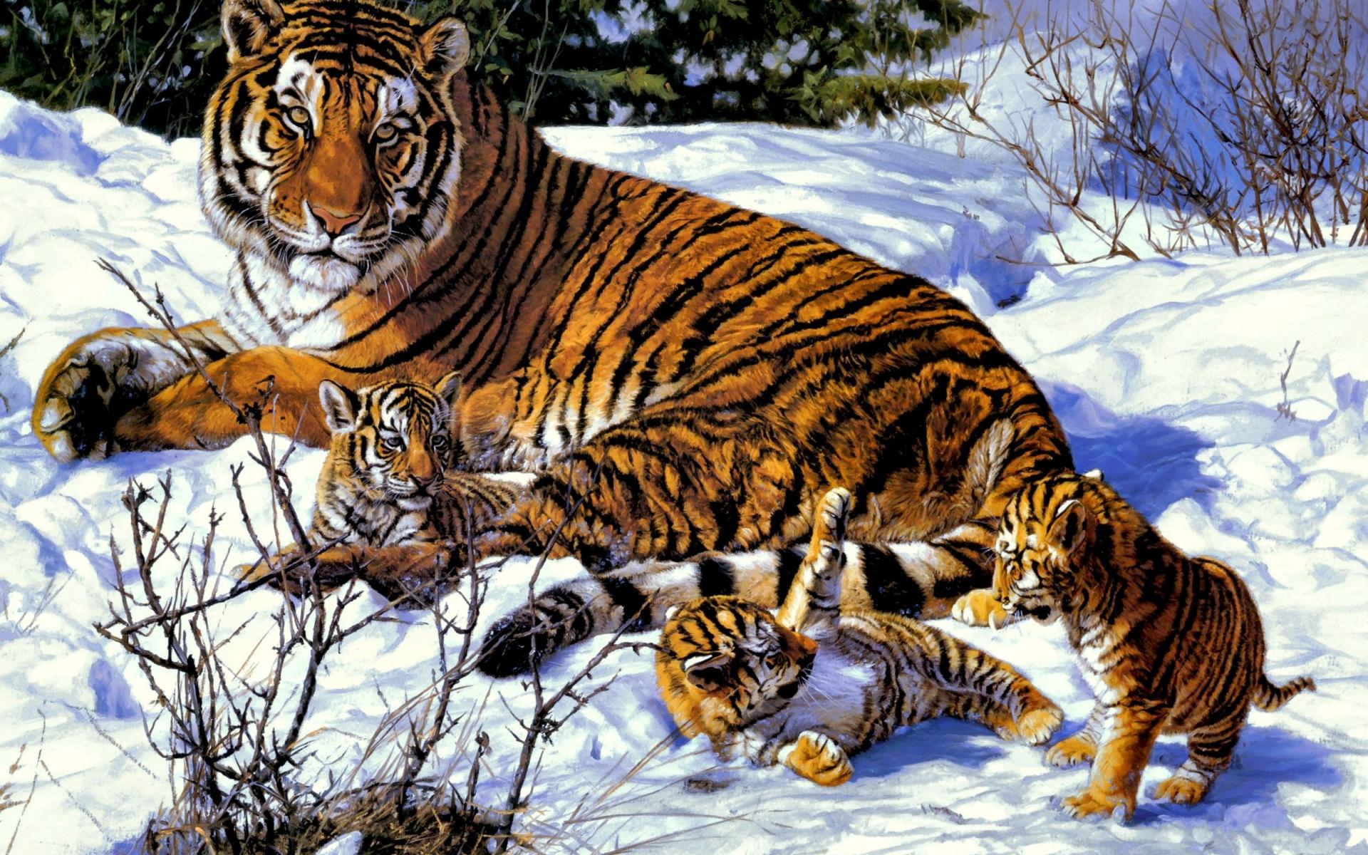 37392 Hintergrundbild herunterladen Tiere, Tigers, Bilder - Bildschirmschoner und Bilder kostenlos